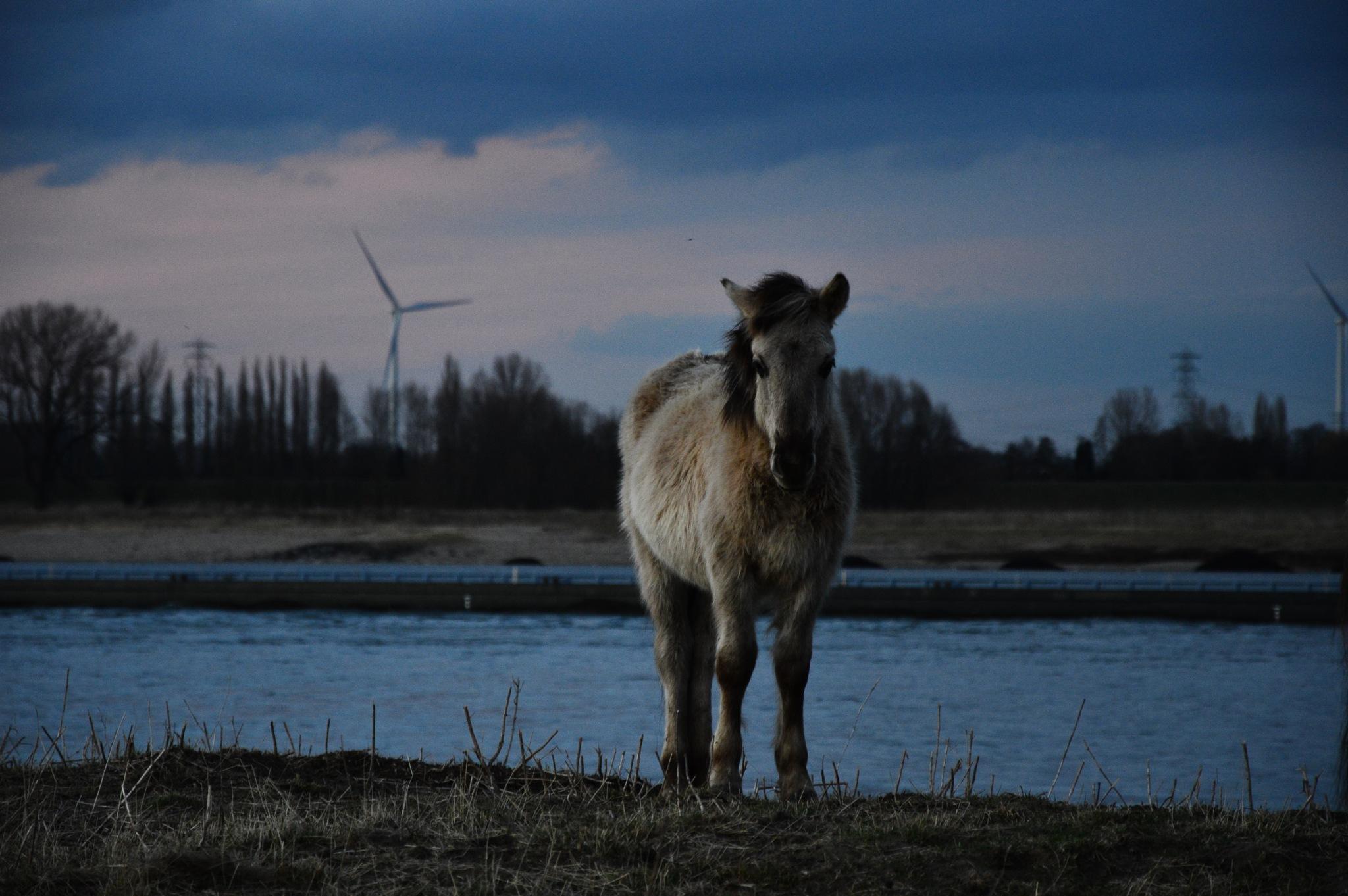 Wild horse by Roanne Frerejean