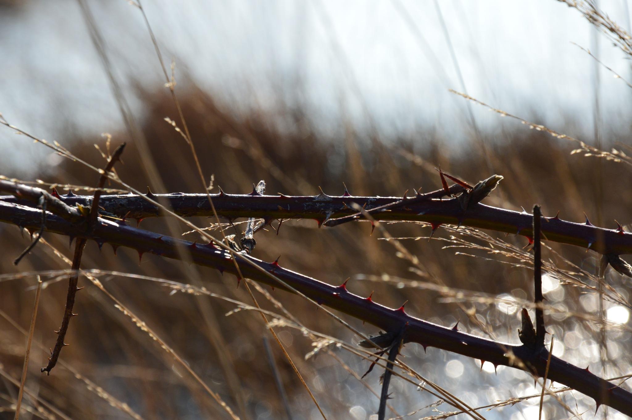 Thorns by Roanne Frerejean