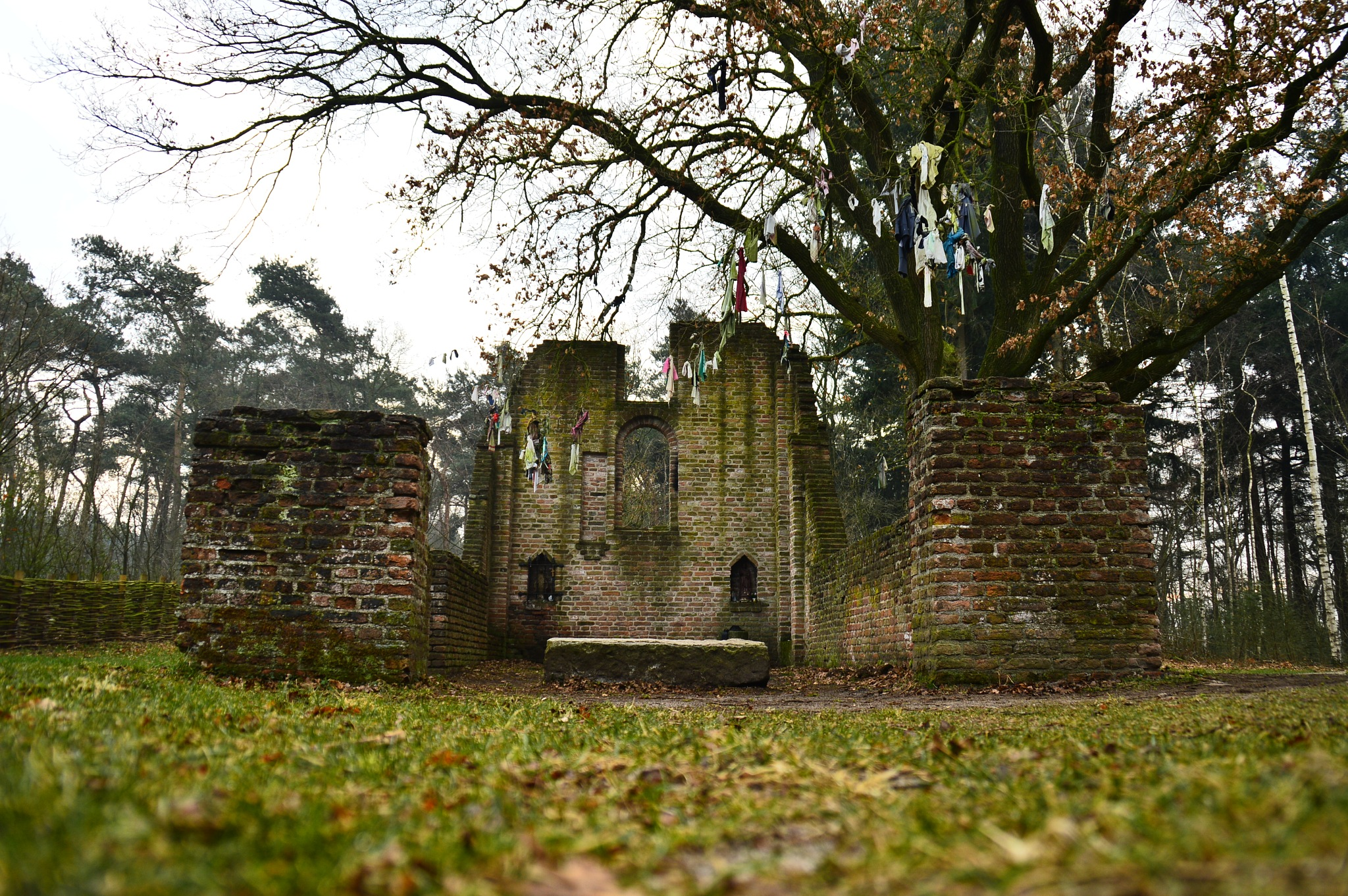 St. Walrick Ruin with fever tree by Roanne Frerejean