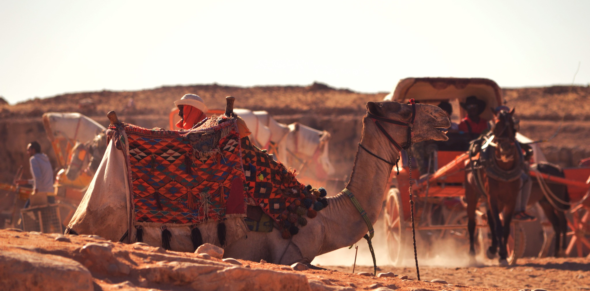 Camel, the symbol of desert  by Attia Awadh