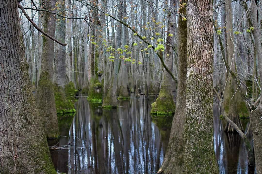 swamp life by Kristin Castelly