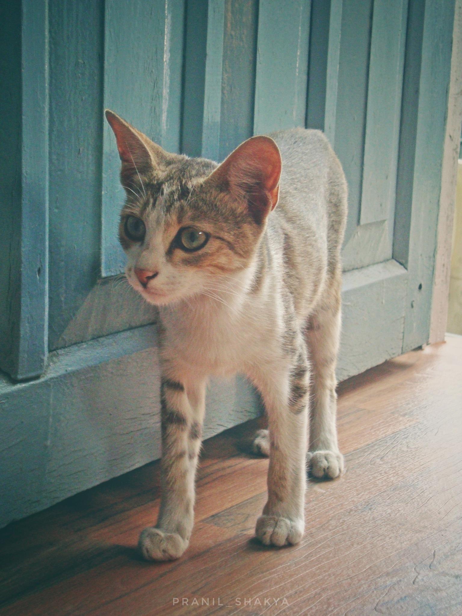 |CAT| by Pranil Shakya