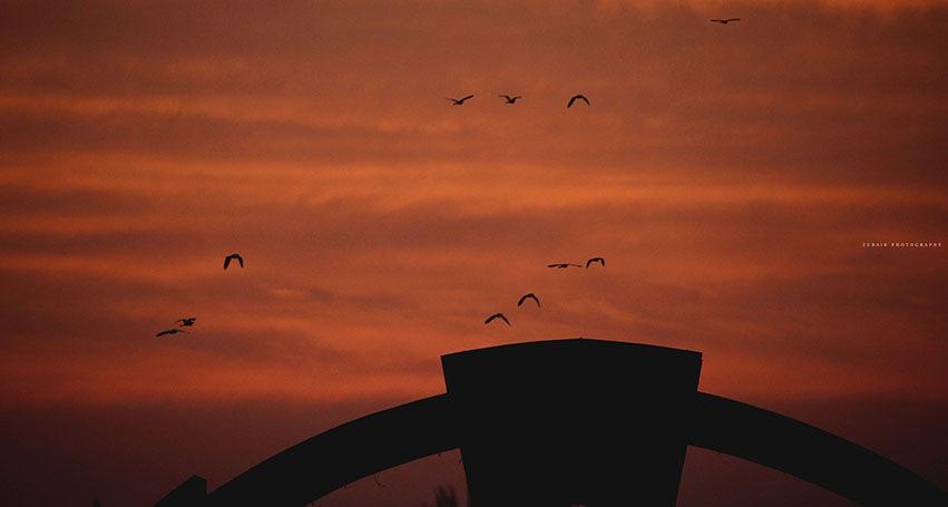 back to the nest by Zubair Ansari