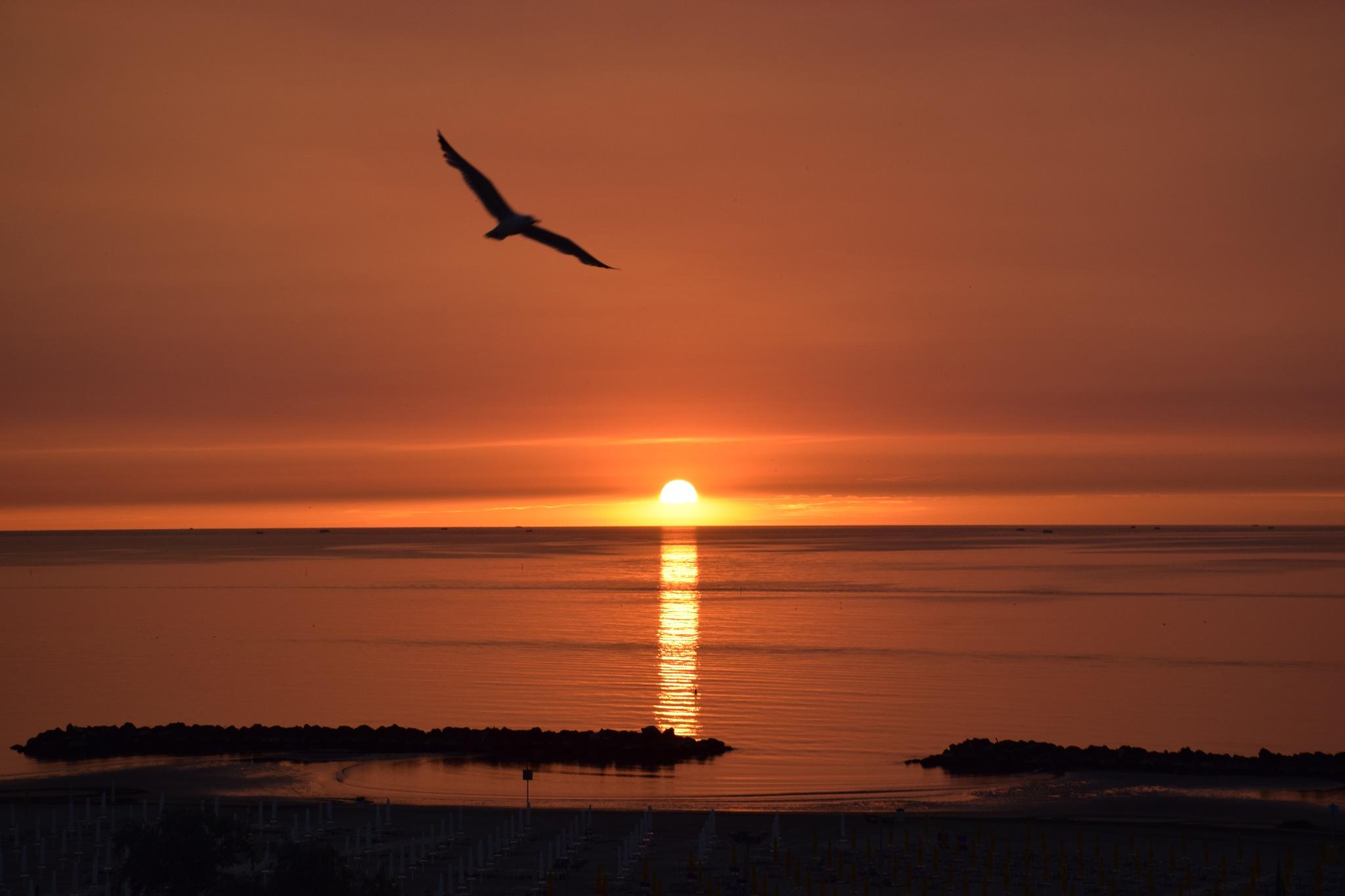 Sunrise  by Carolina Vanessa Frontini