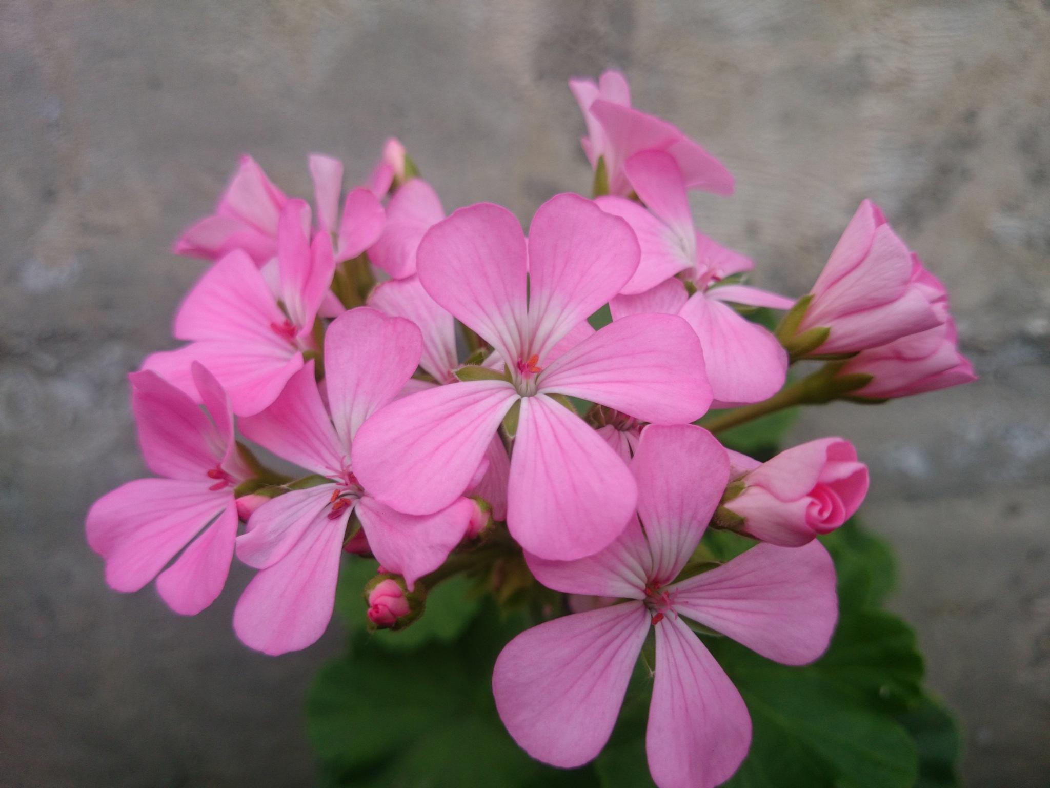 Morning flowers  by solmaz