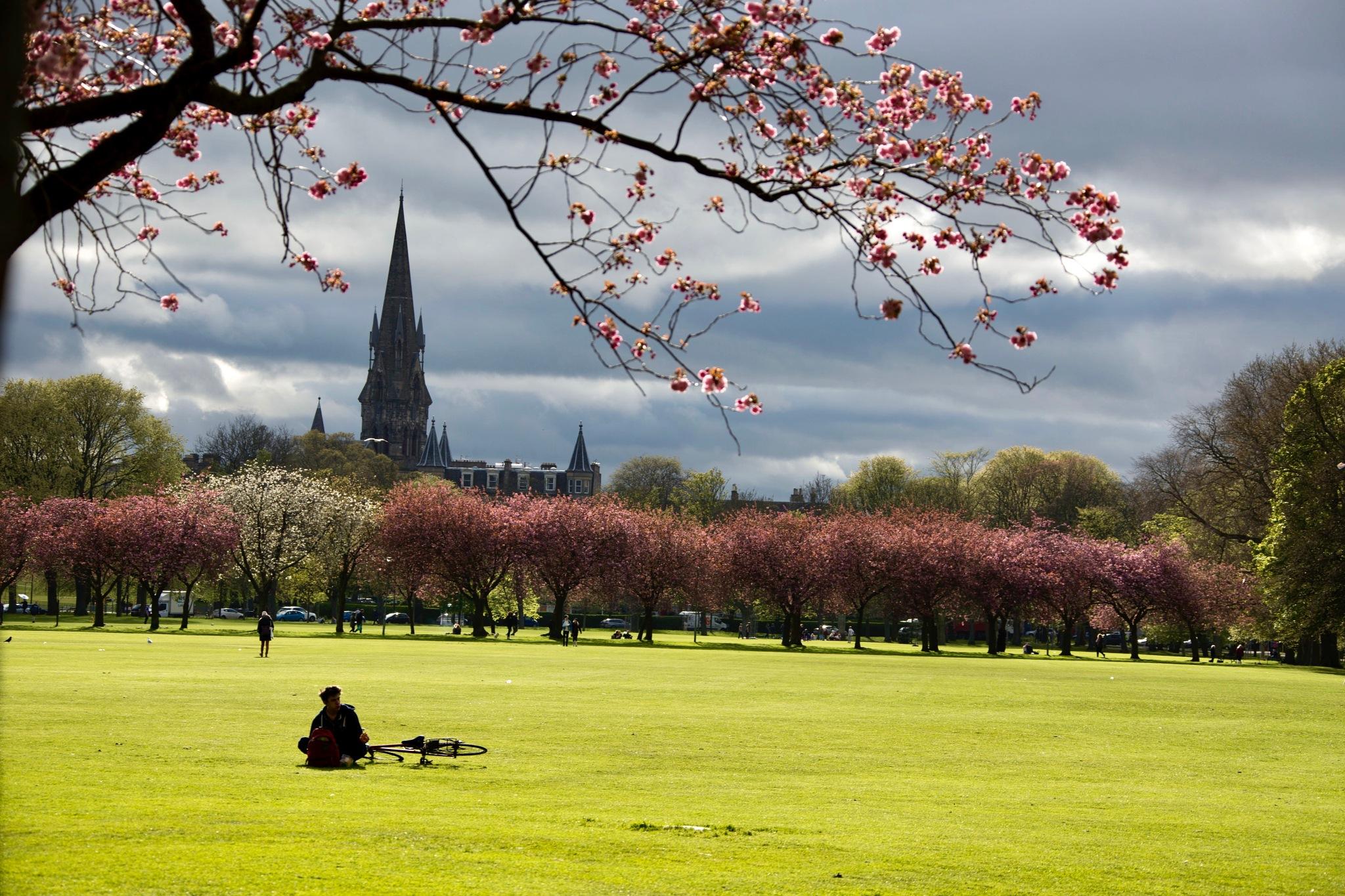 Spring days in the Meadows by Francisco Sá da Bandeira