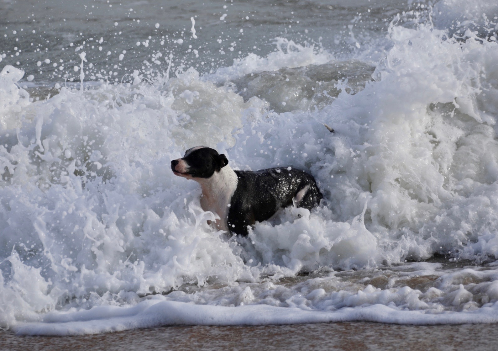 The dog that defies the waves  by Francisco Sá da Bandeira