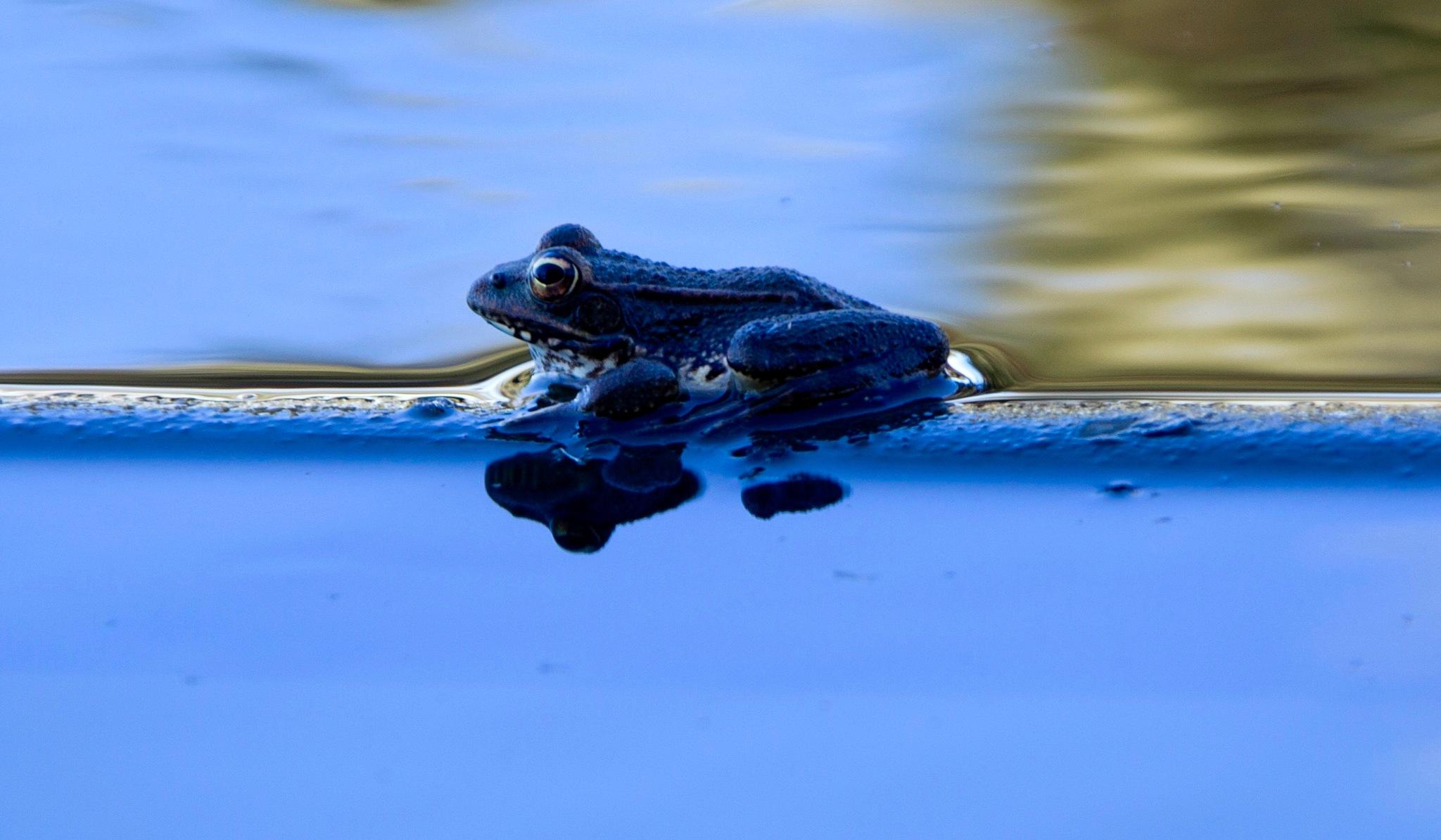 The frog by Francisco Sá da Bandeira