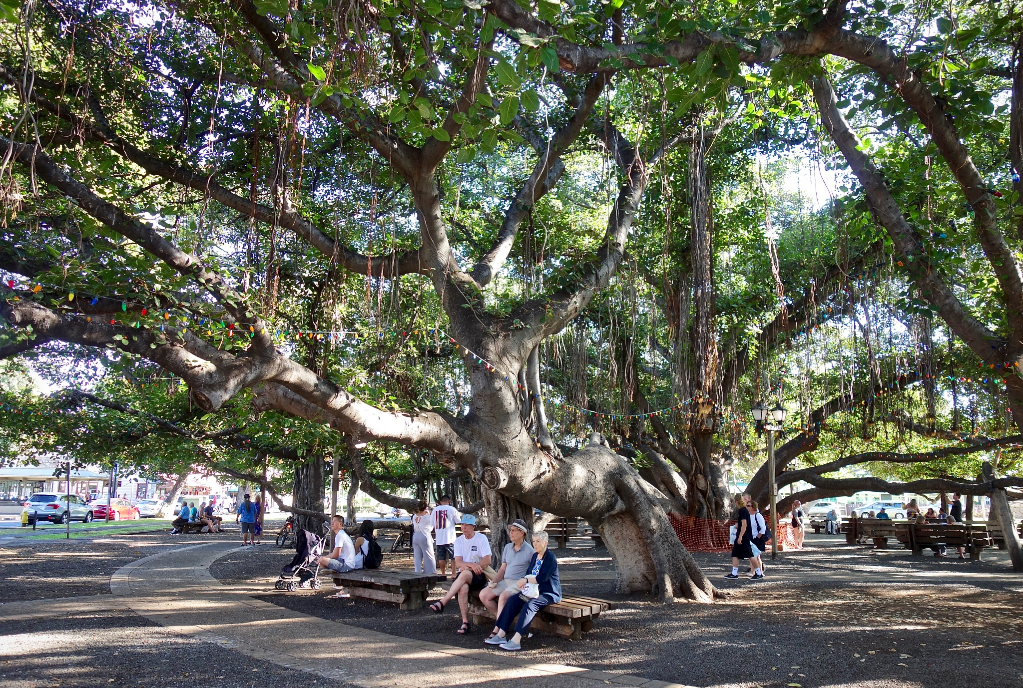 Photo in Random #gigantic  banyan tree  people