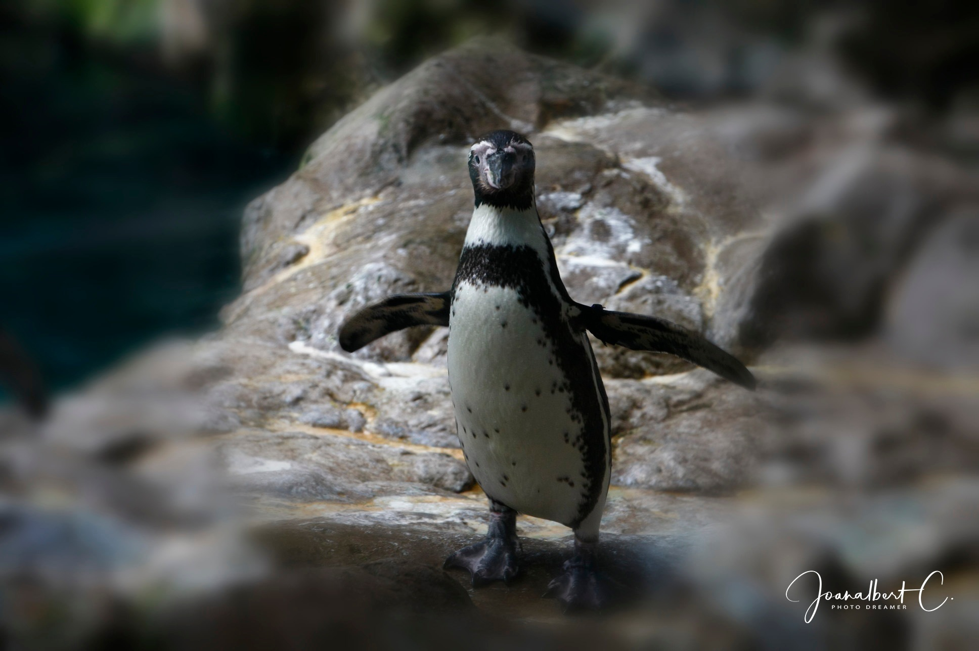 Happy feet by Joanalbert Castillo Solé