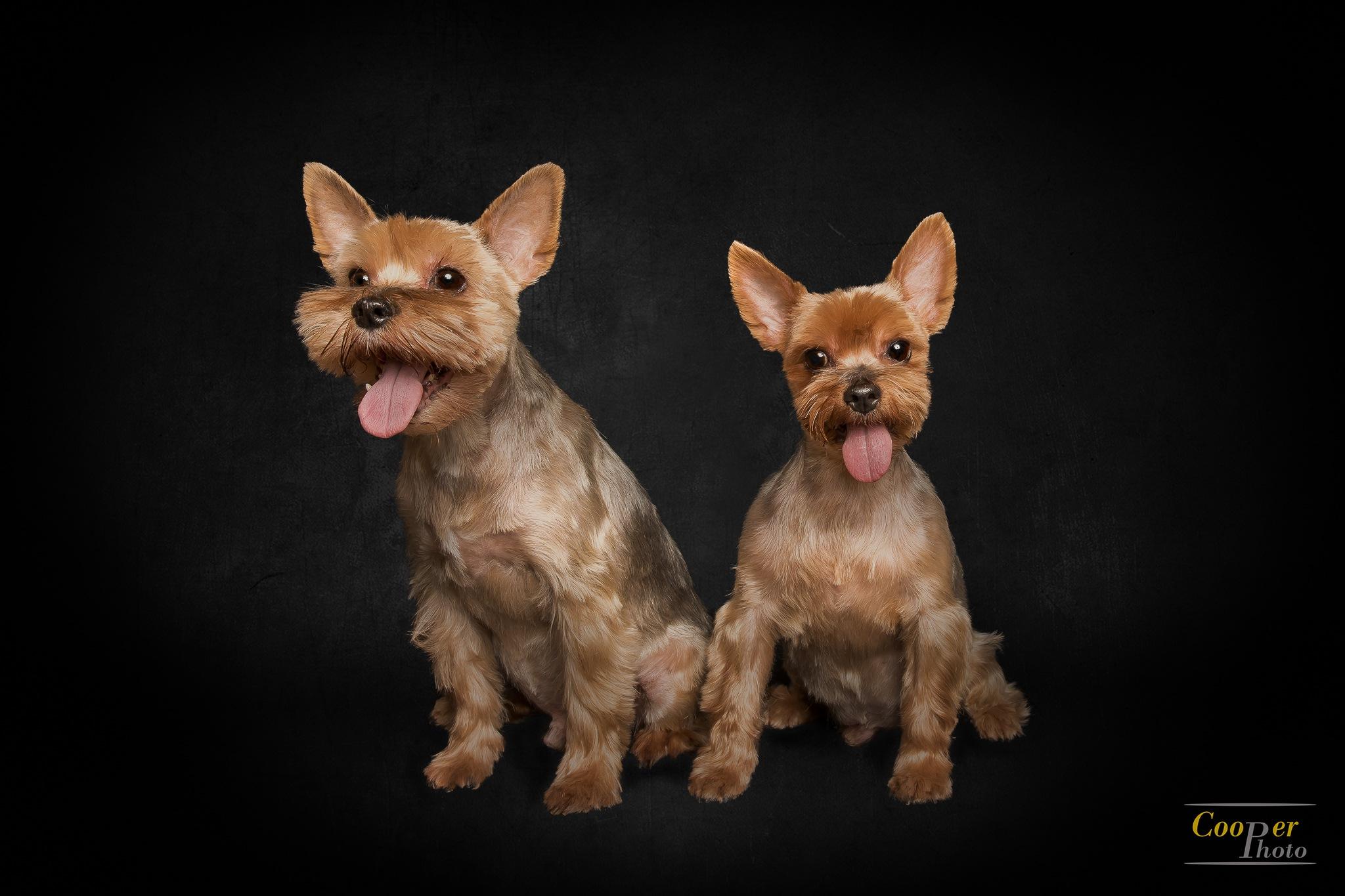 dogs by Joe Cooper