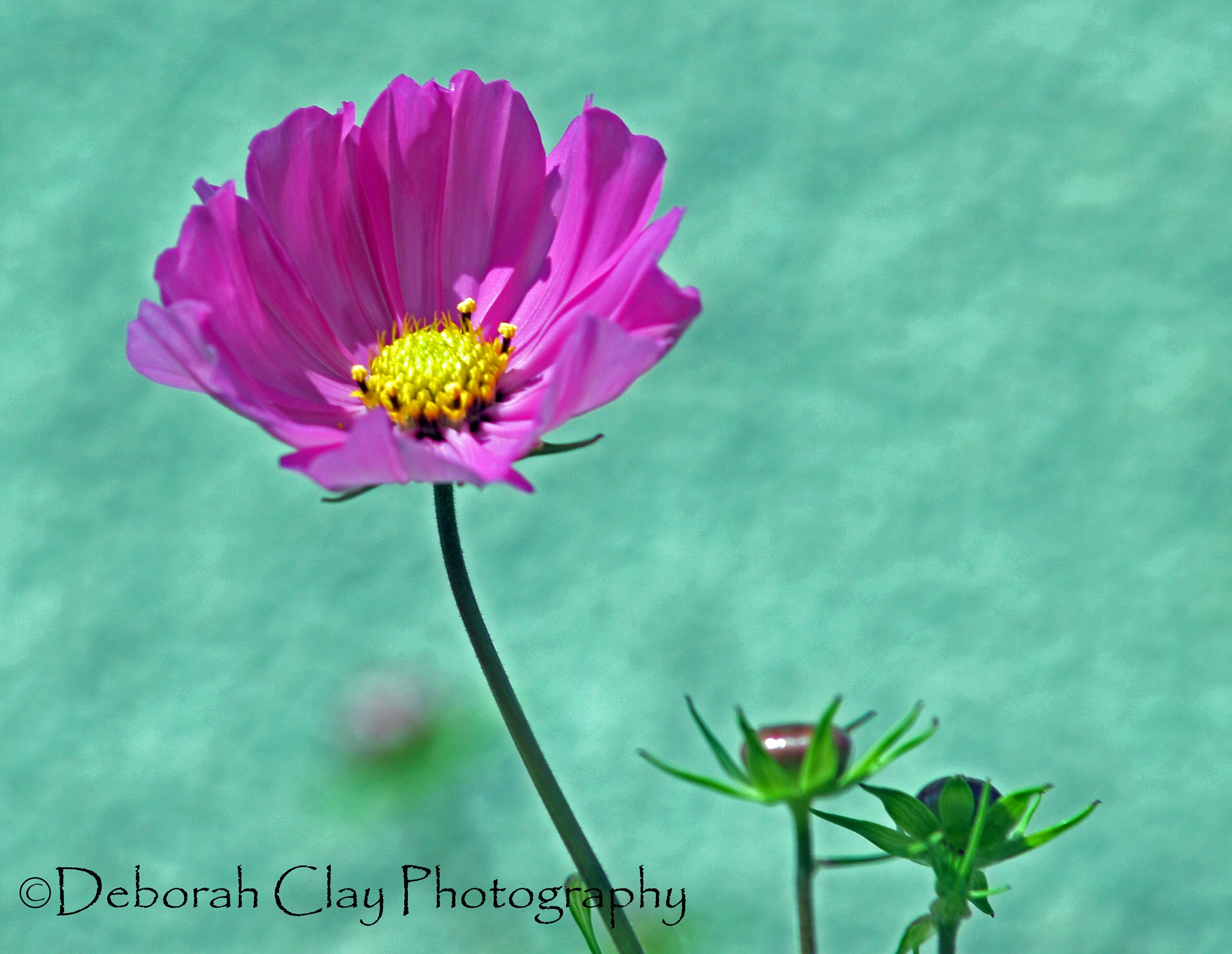 Flower by Debbie Clay