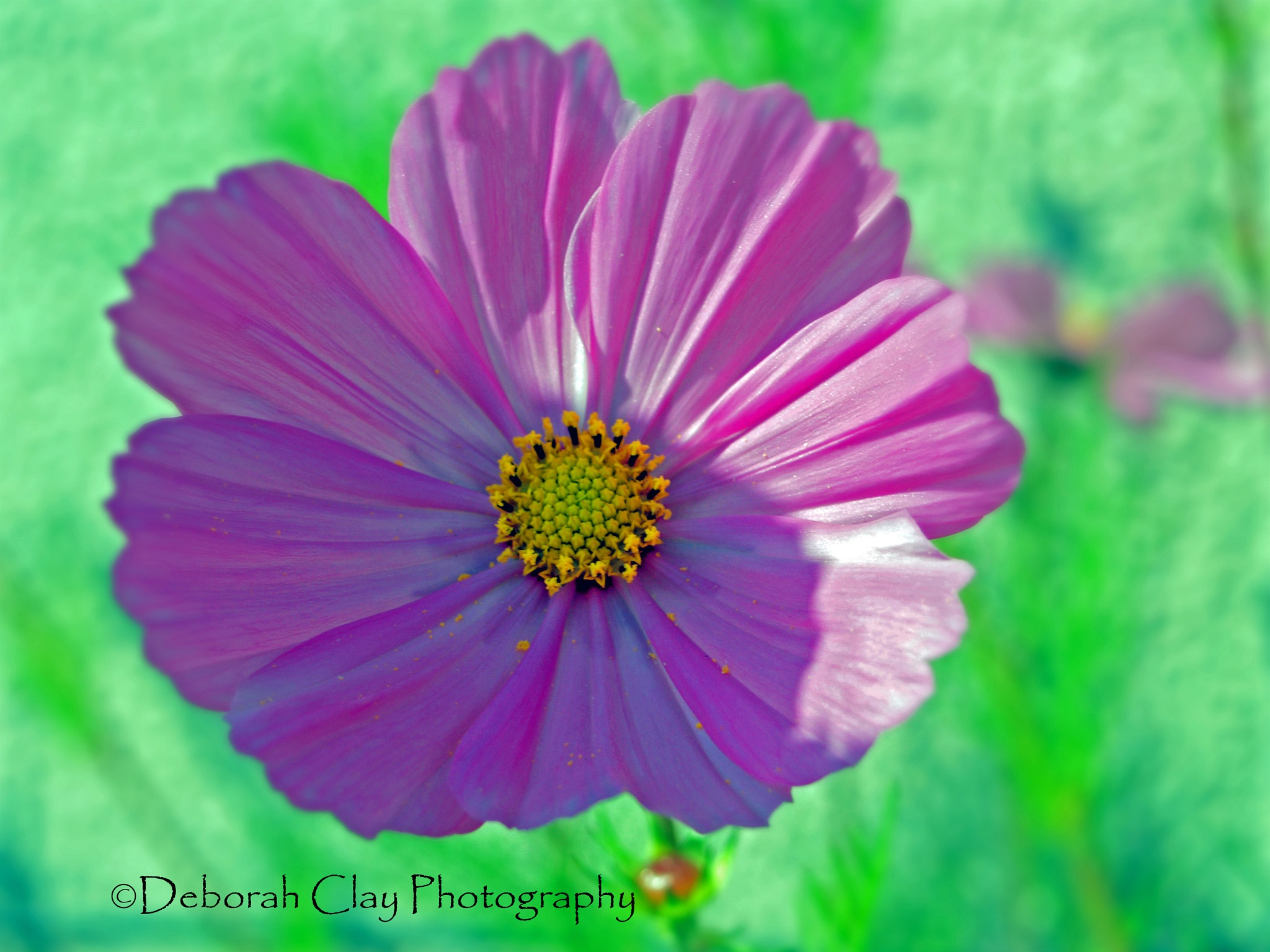 Pretty in Pink by Debbie Clay