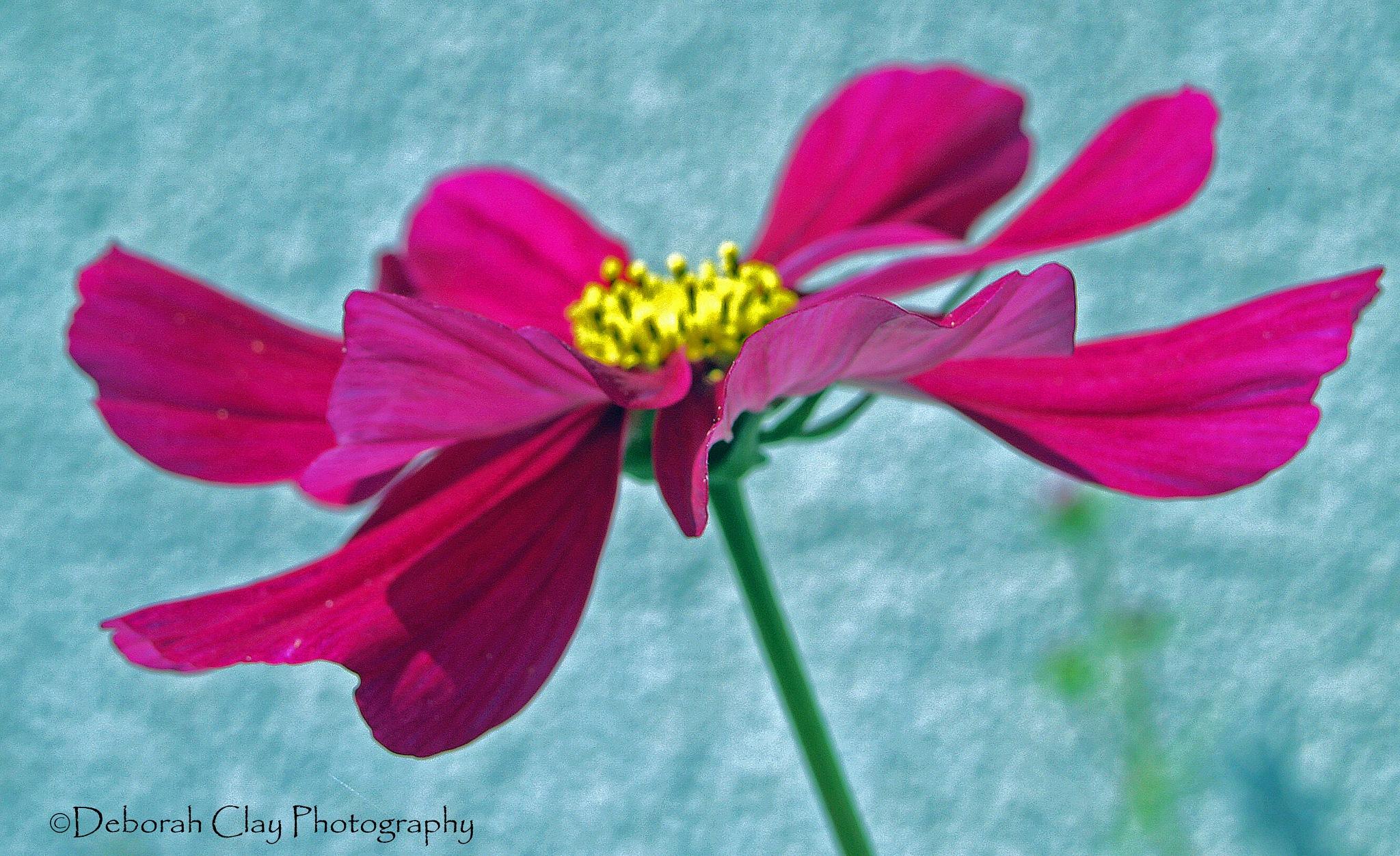 In Full Bloom by Debbie Clay