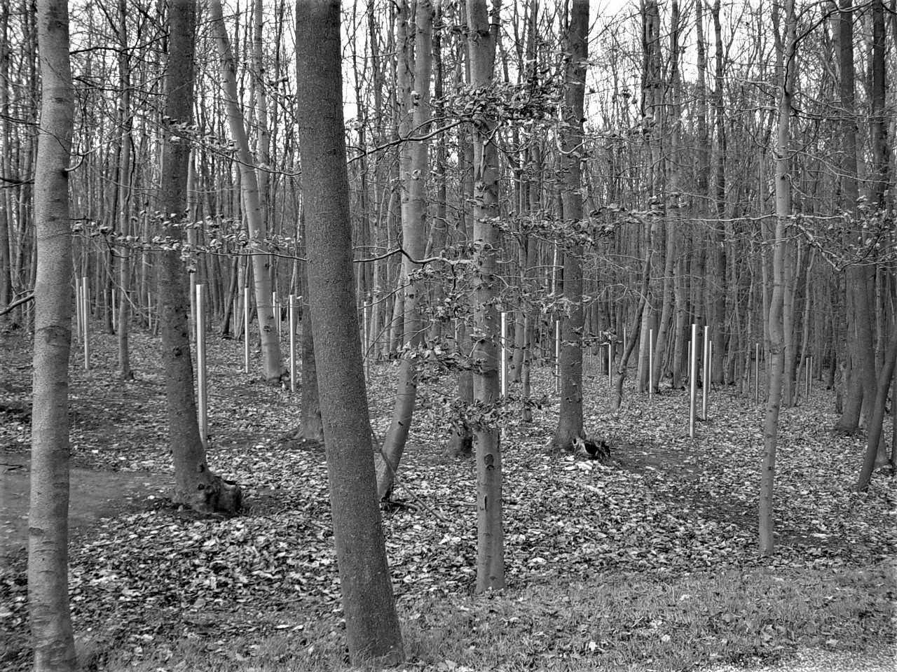 Buchenwald 02 by Murat Erkman