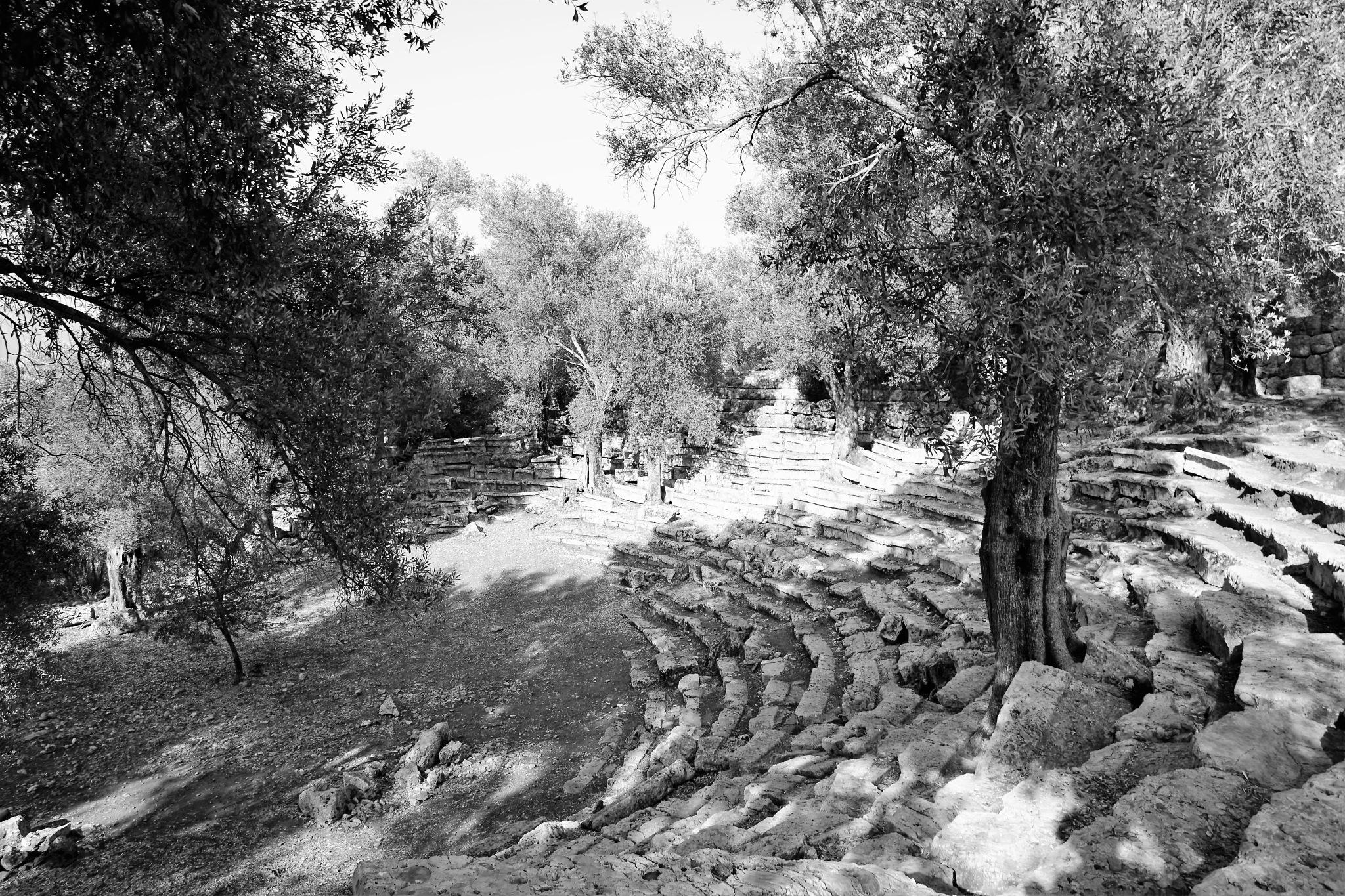 Sedir Island Cedrea 17 by Murat Erkman