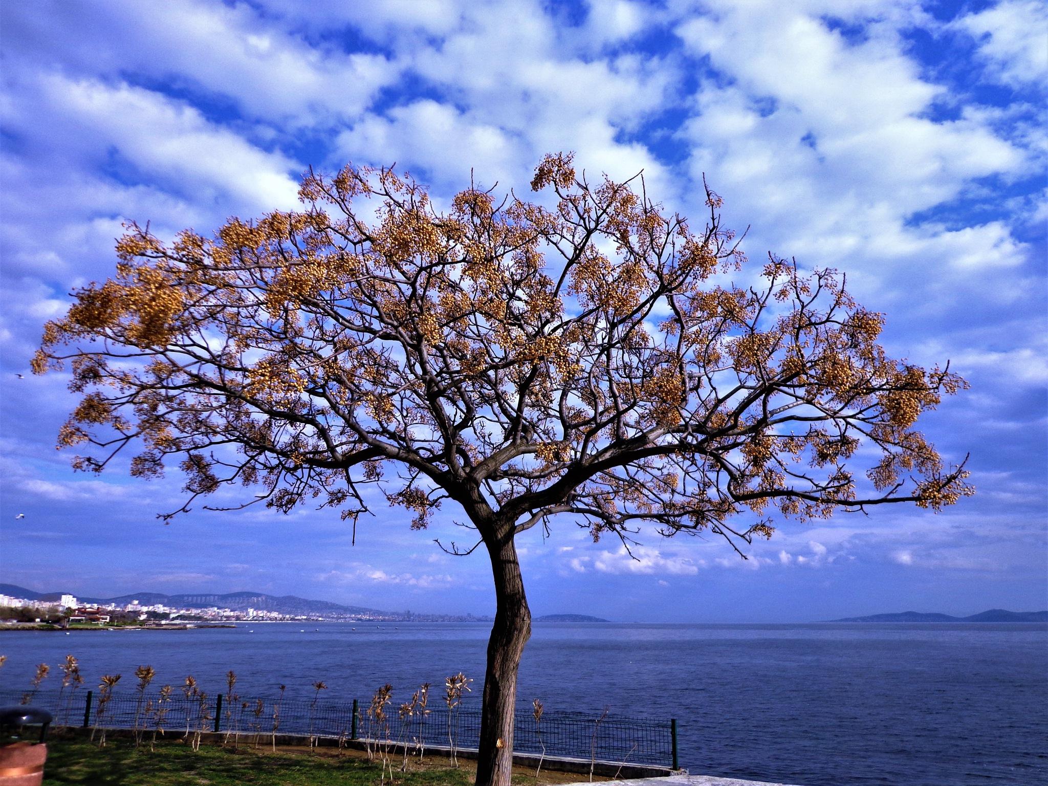 Kadıköy 13 by Murat Erkman