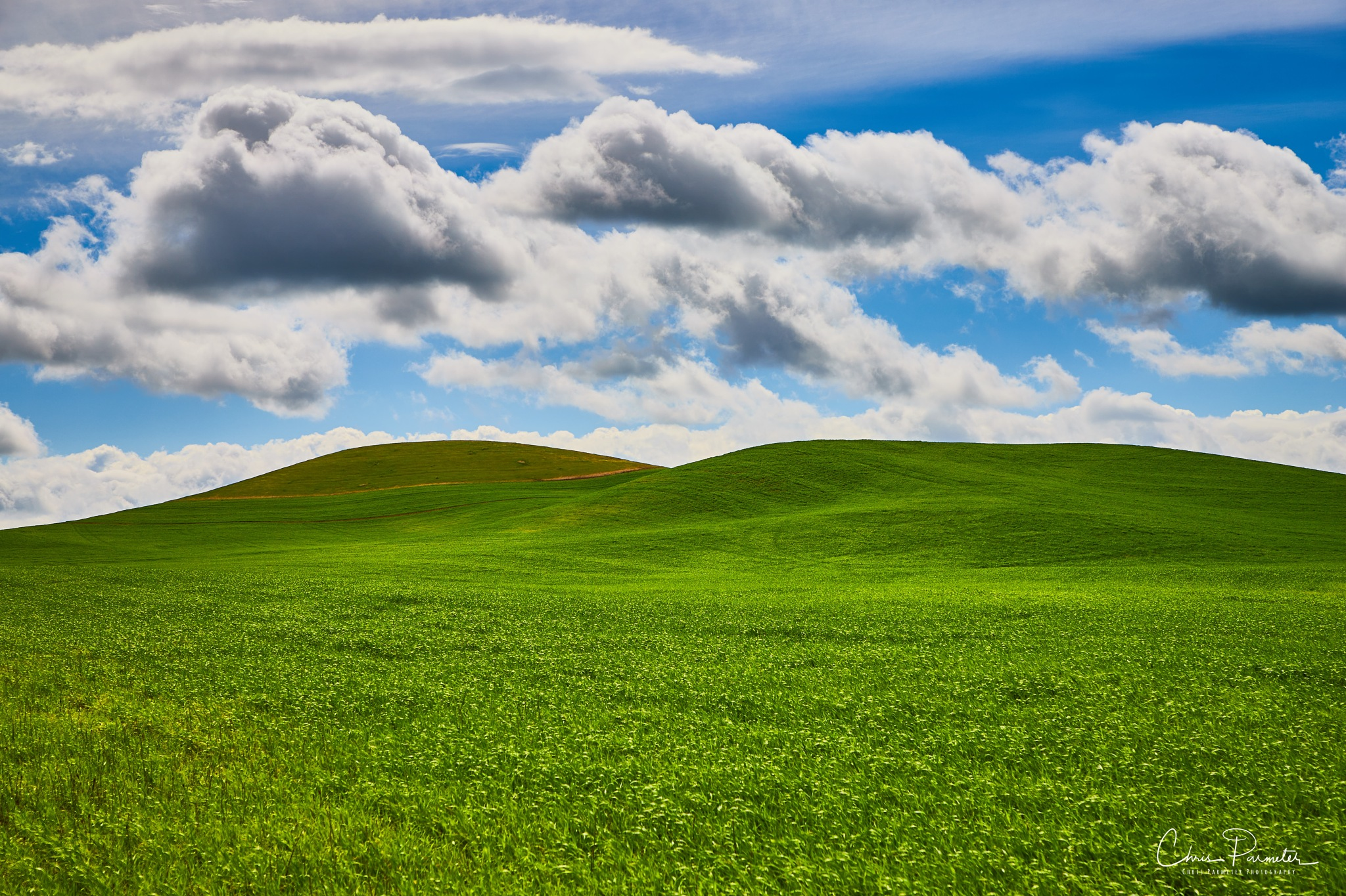 Rolling Hills of the Palouse by Wet Dog Studios