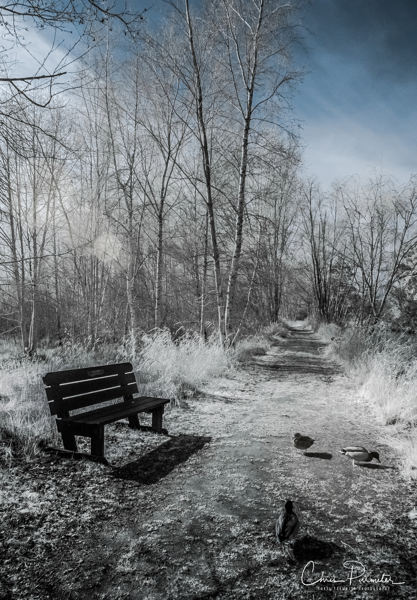 Dreamy Pathway by Wet Dog Studios