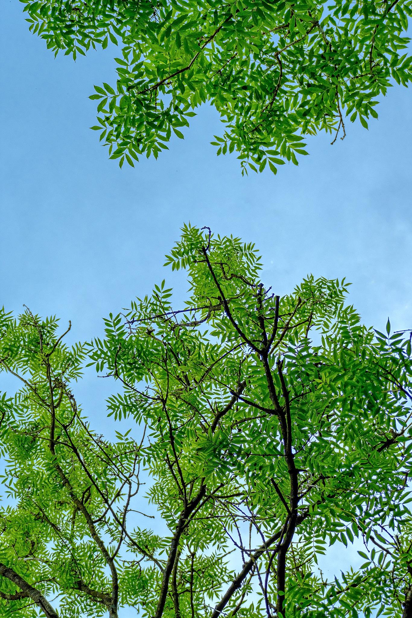 Leaves by Bernhard Romirer