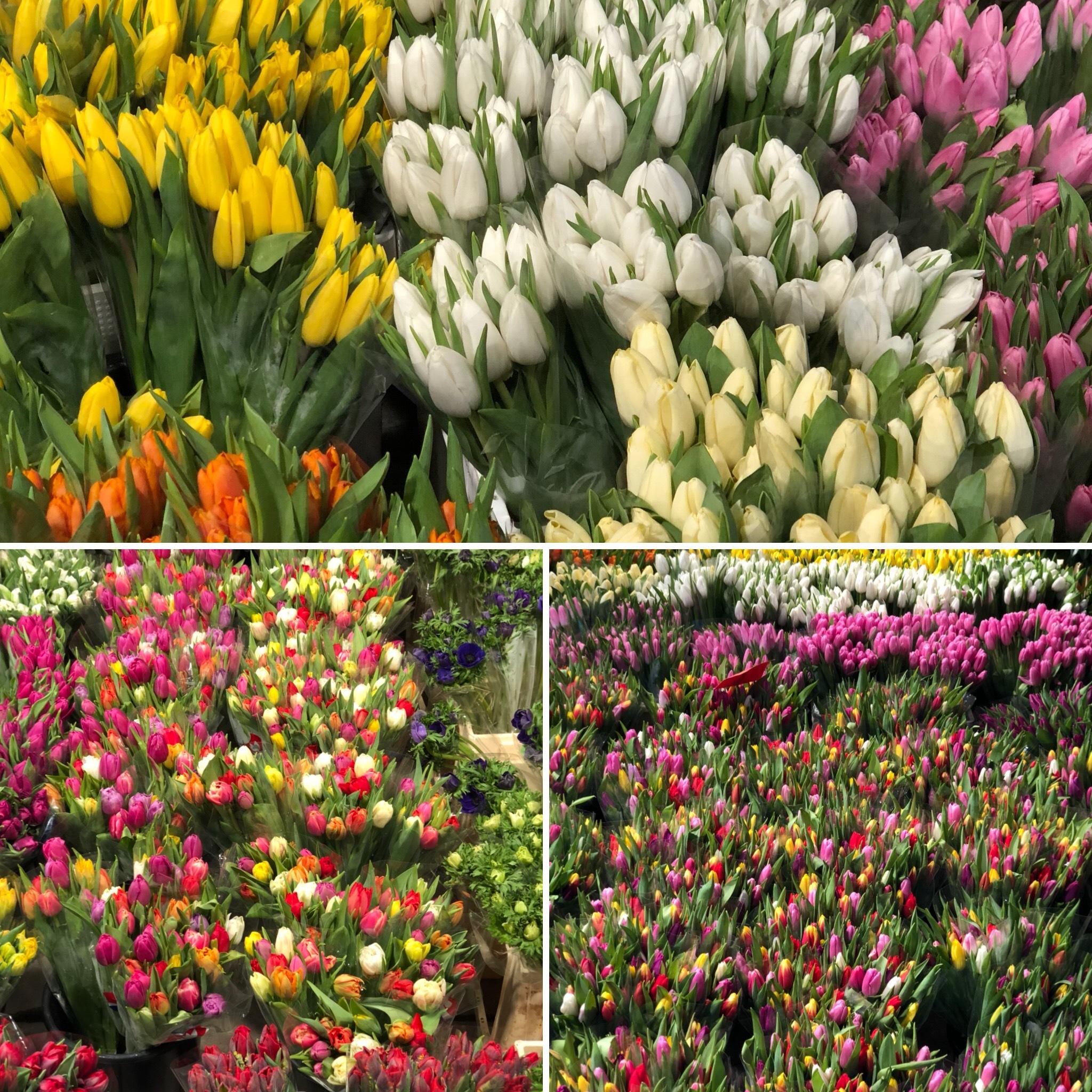 Tulip season by Anders