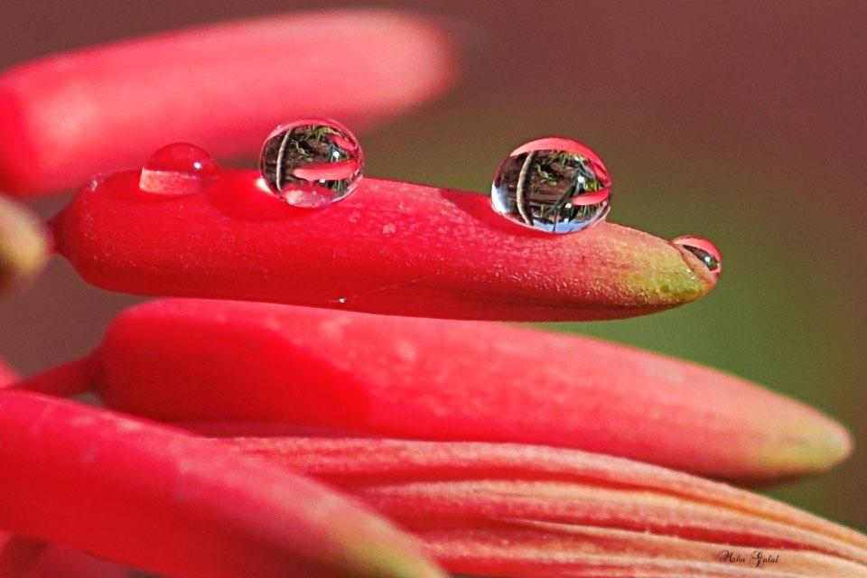 drops  by Maha Galal