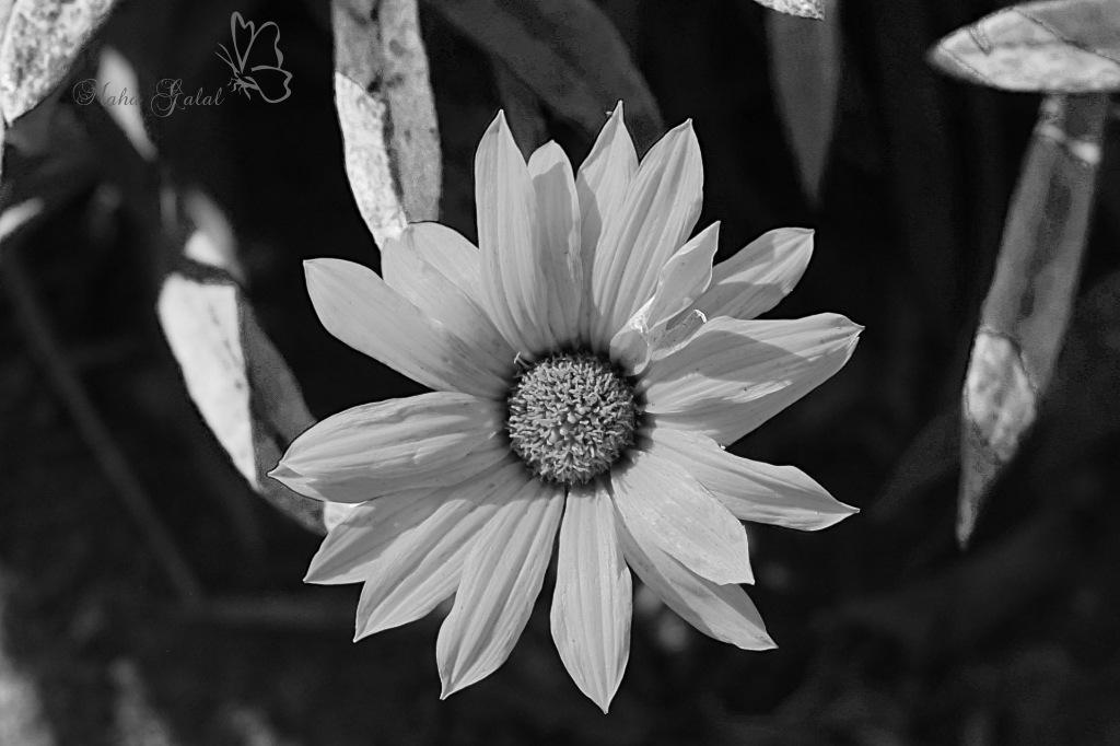 simple beauty by Maha Galal