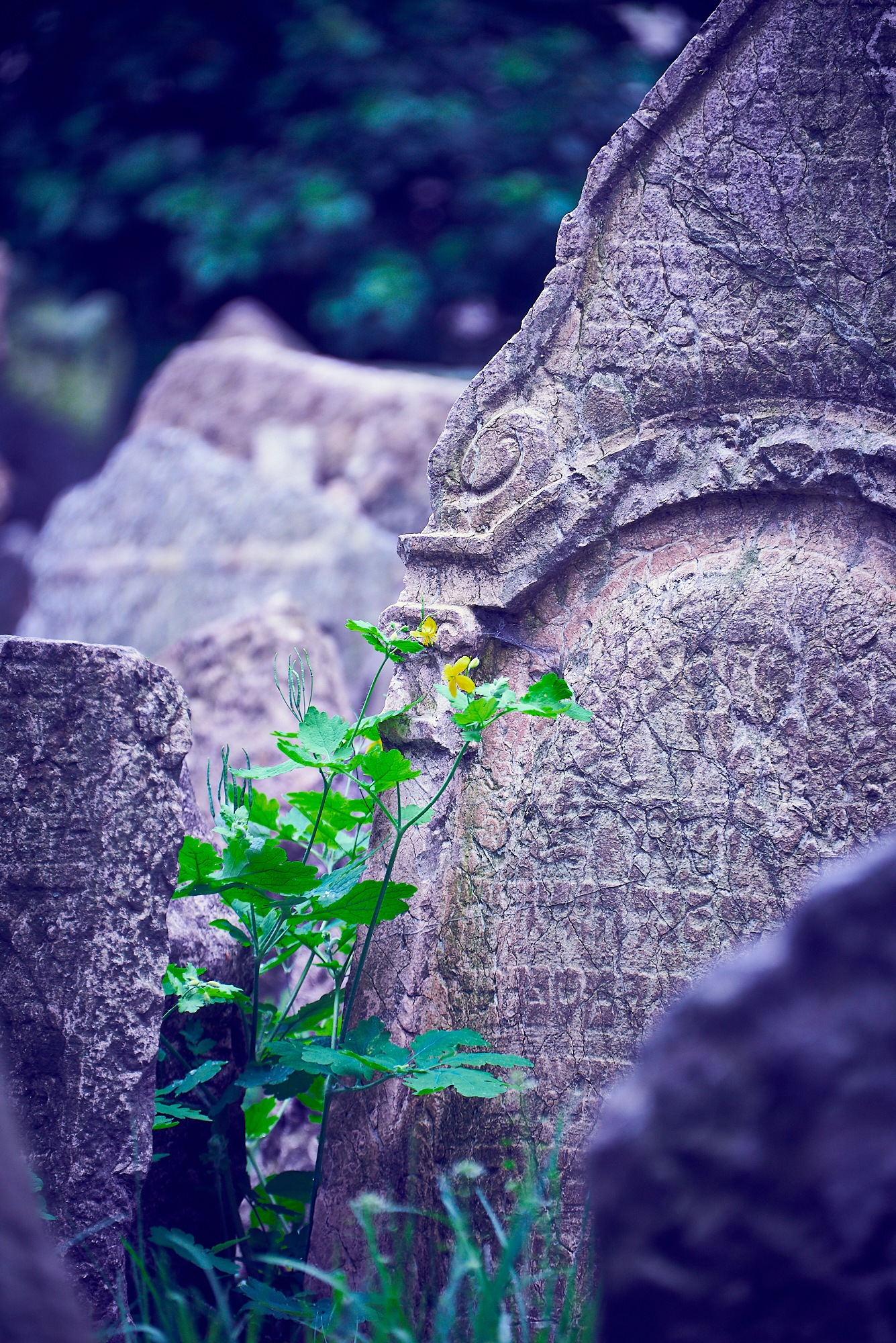 old Jewish cemetery prague by Peter Buck