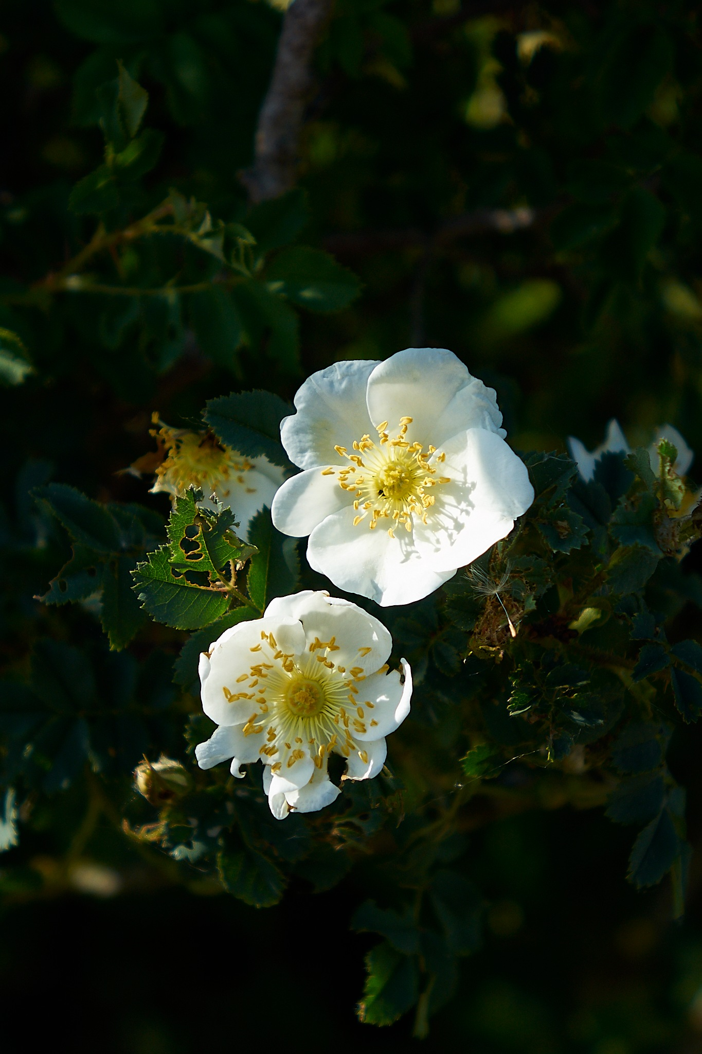 White Flowers by Peter Buck