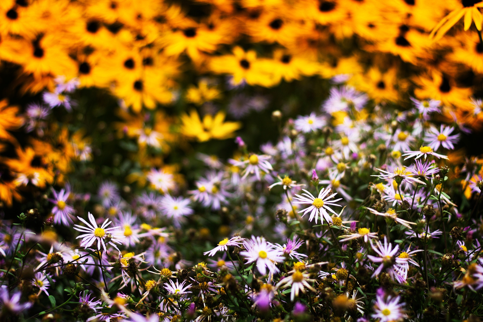 Autumn flowerbed by Håkan Arnbert