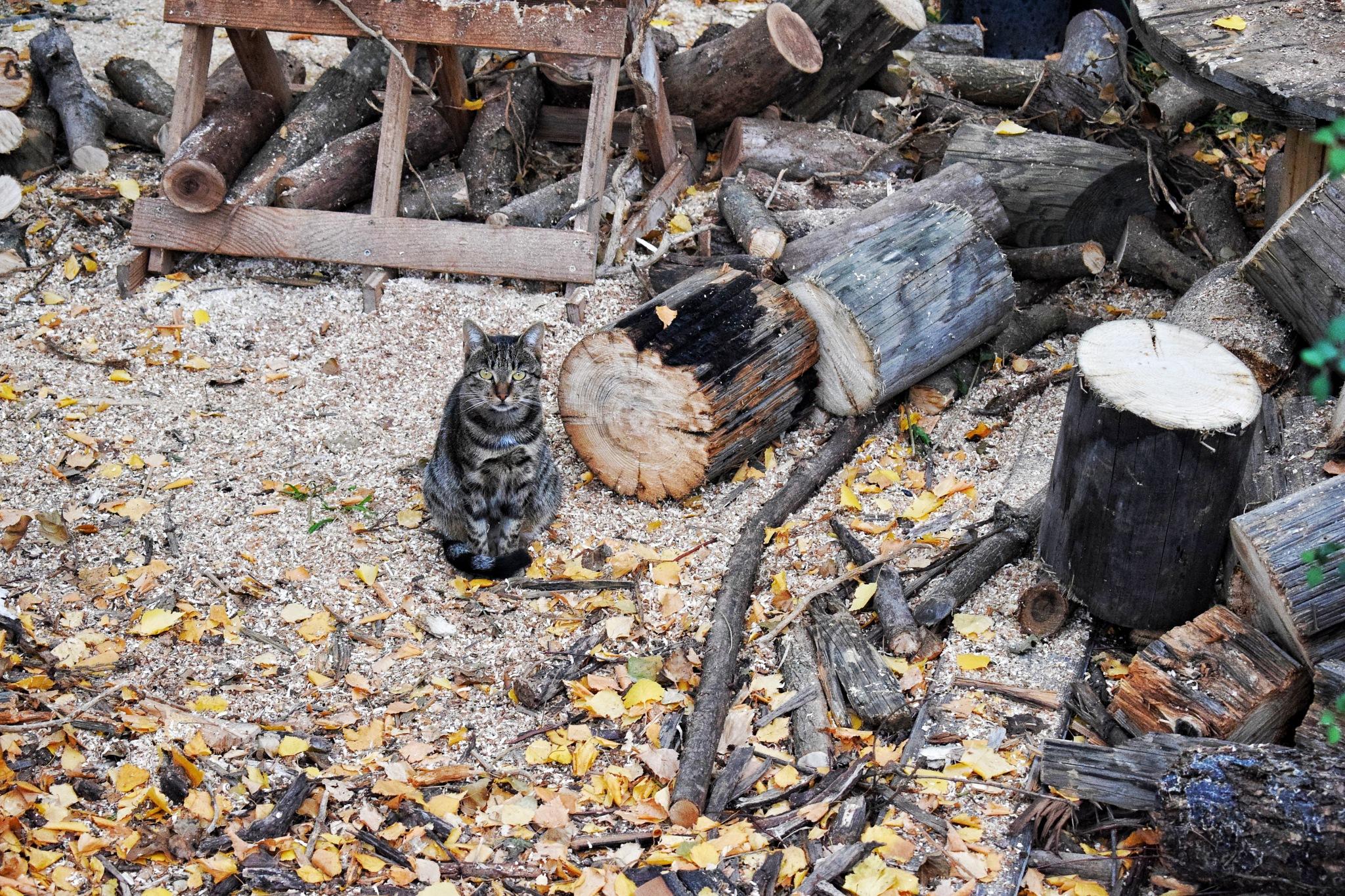 cat in a messy yard by Gabrijela Grcić