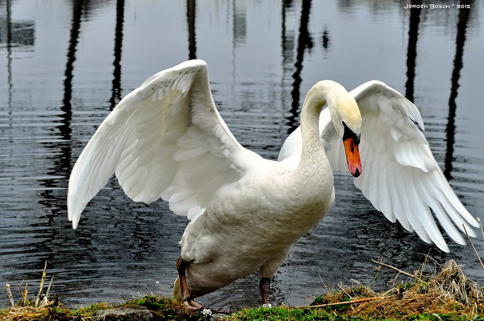 """""""Swan Lake"""" by jeroen bosch"""