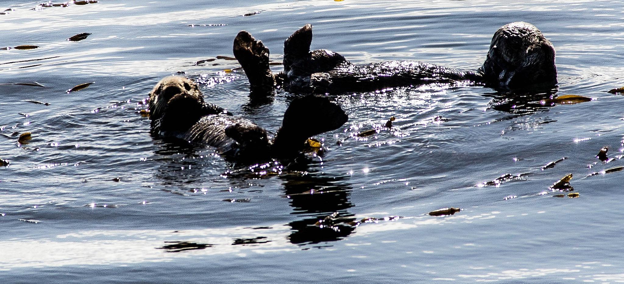 Momma Teach Me to Swim by Jason Graefen
