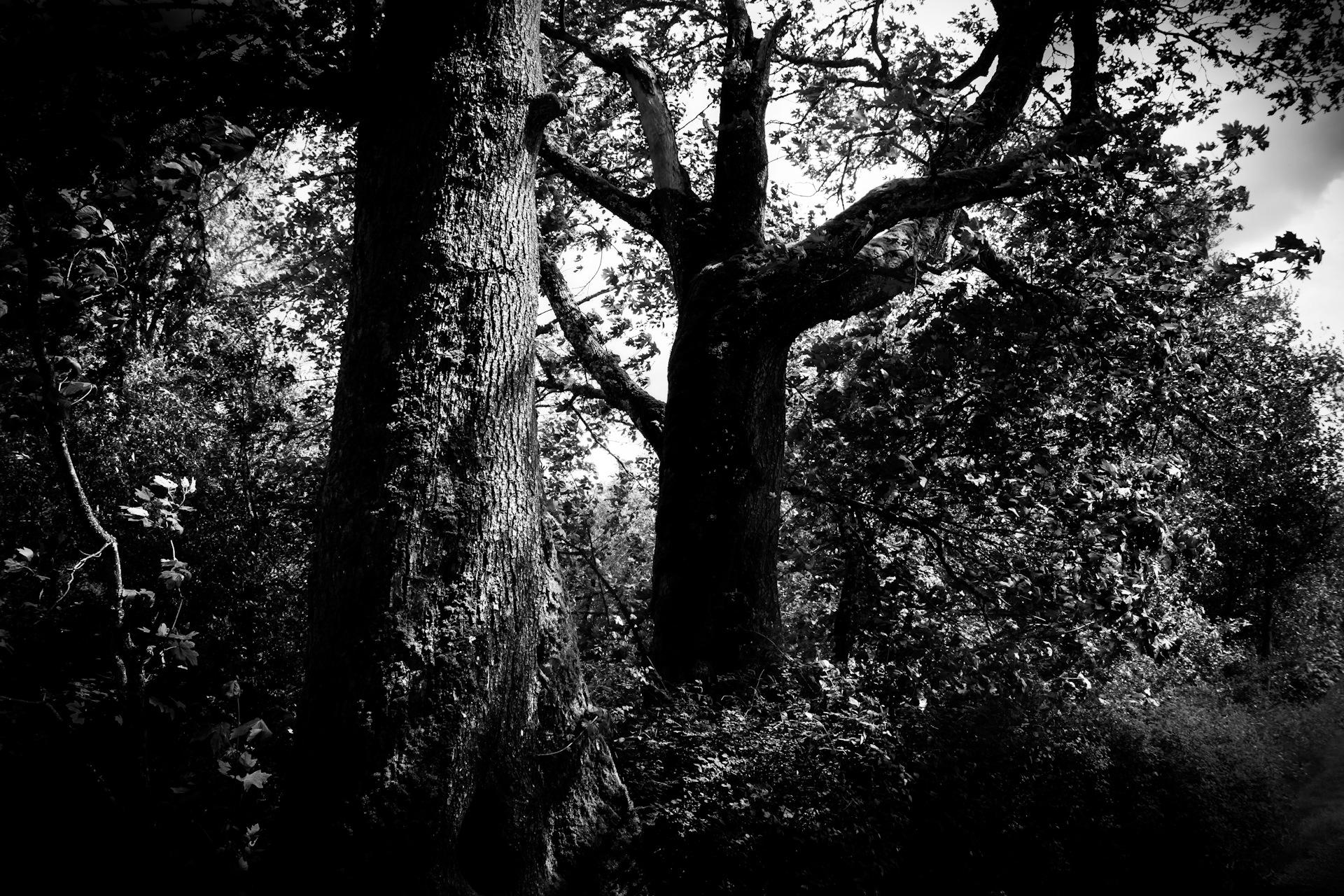 Dark Forest by Jason Graefen