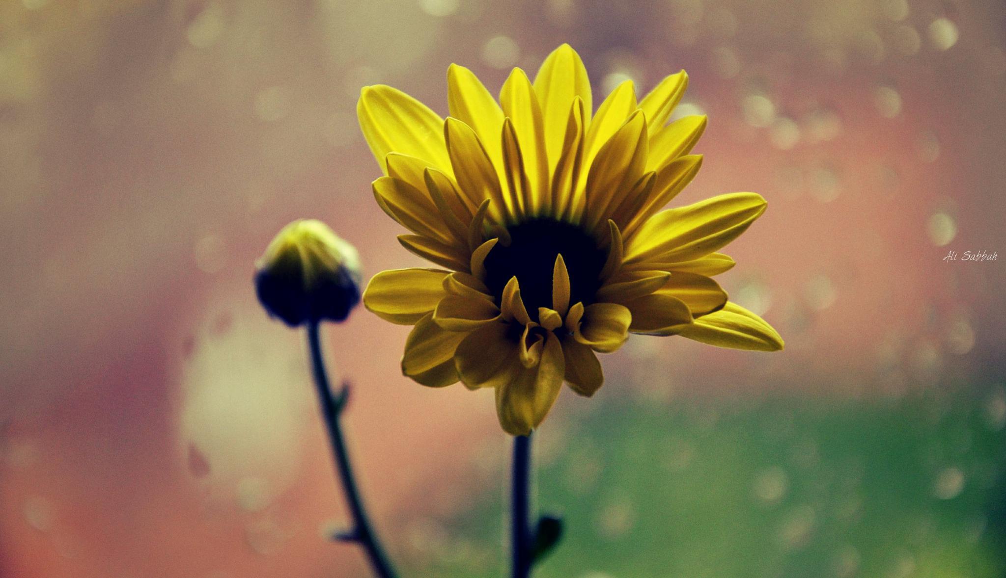 flower by ali sabbah