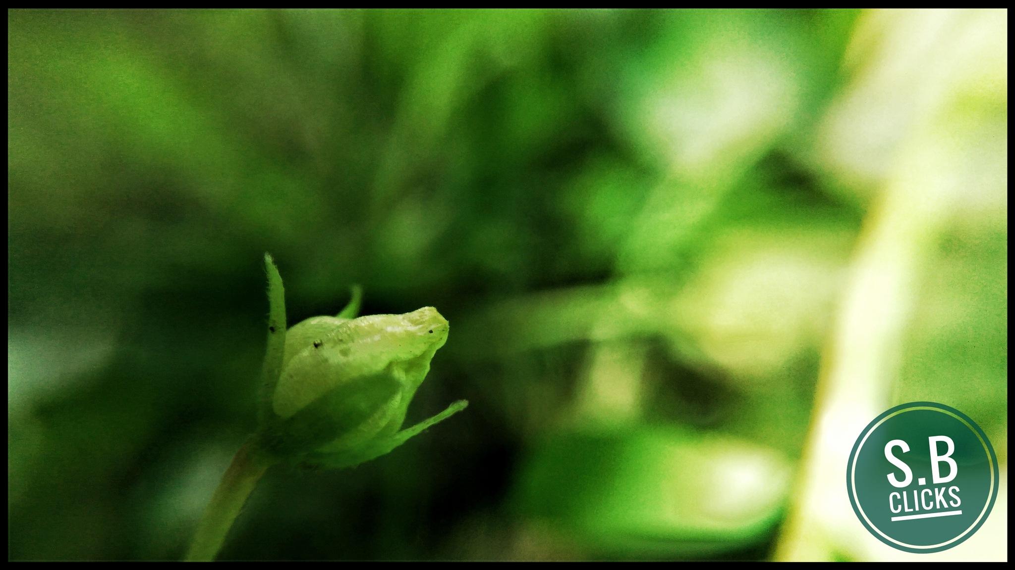 the seeking bud.......   by Swapnil Prakash Bhagwat
