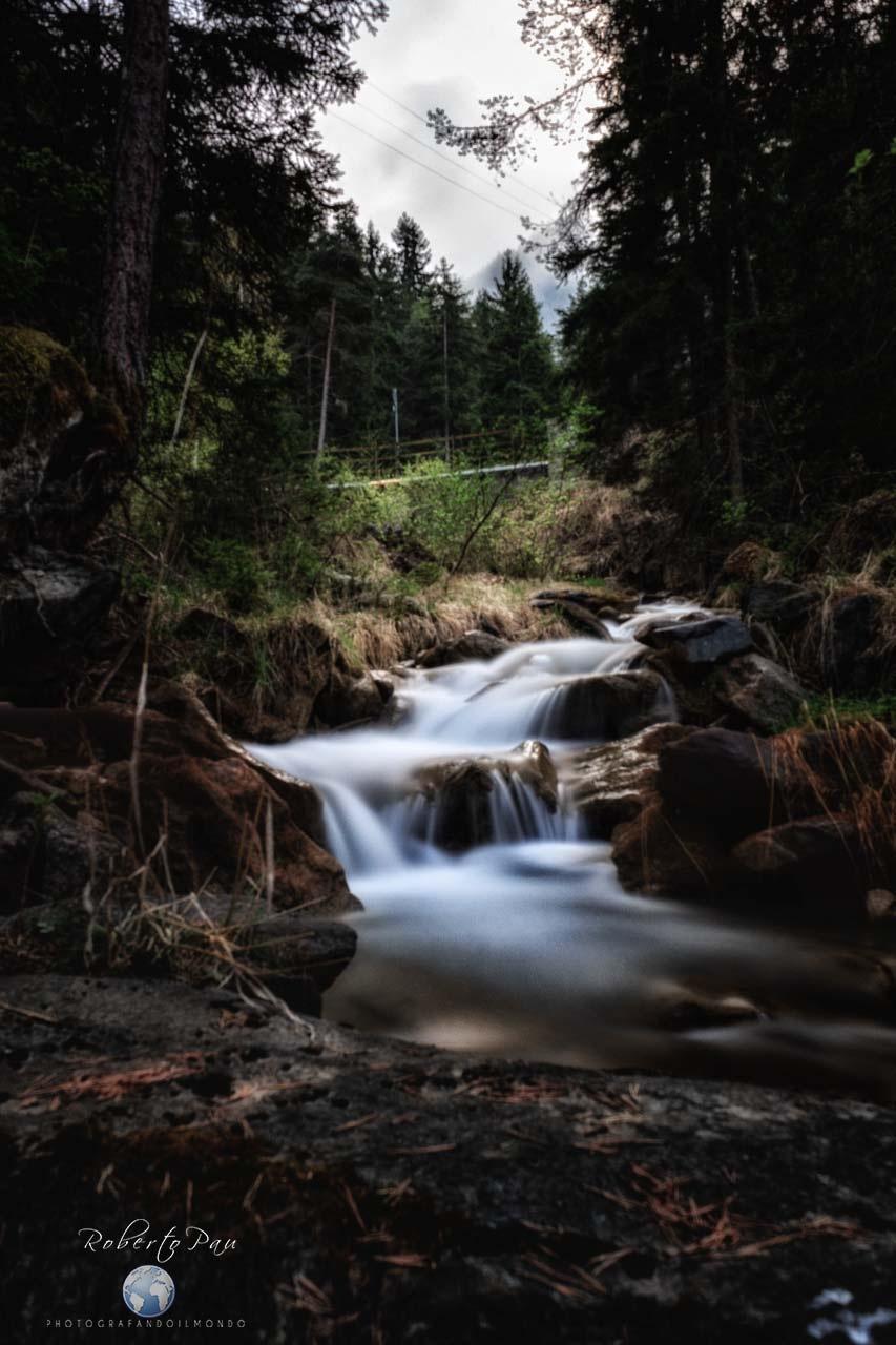 La mia Foresta by Roberto PhPau