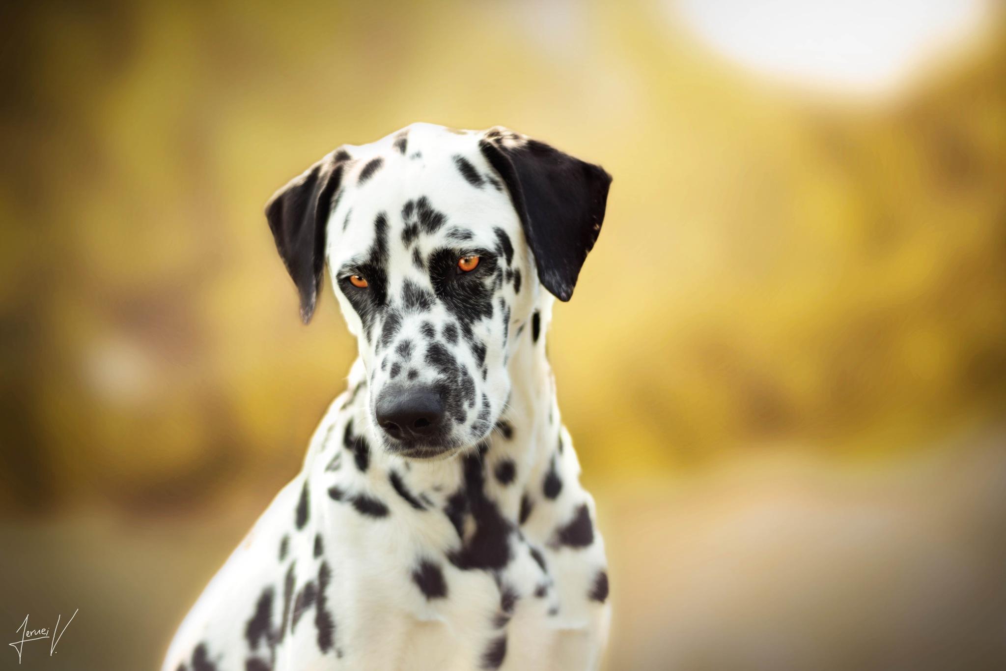 'Dog Model.' by JerneiV.