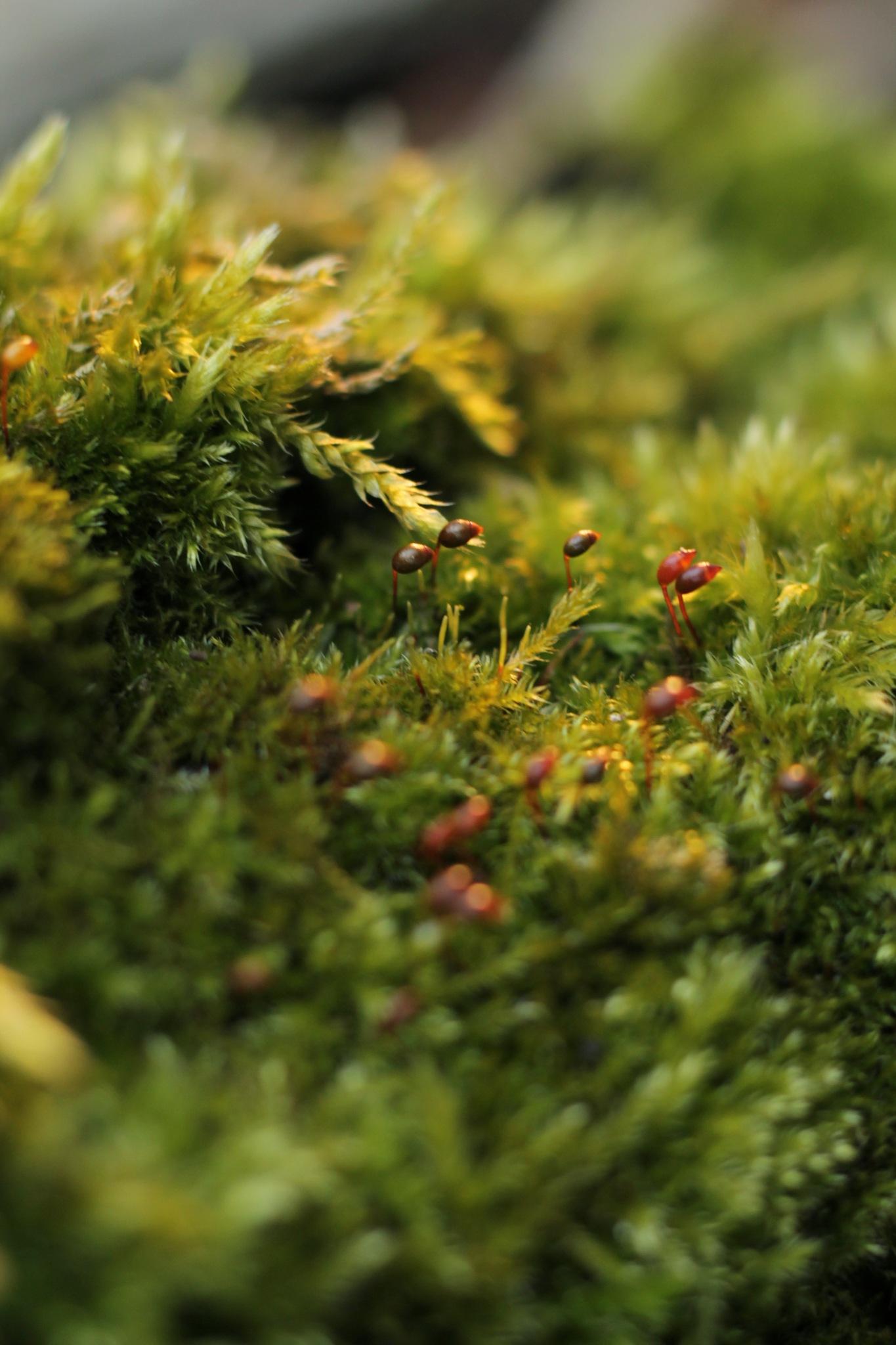 Moss  by Simsyoma
