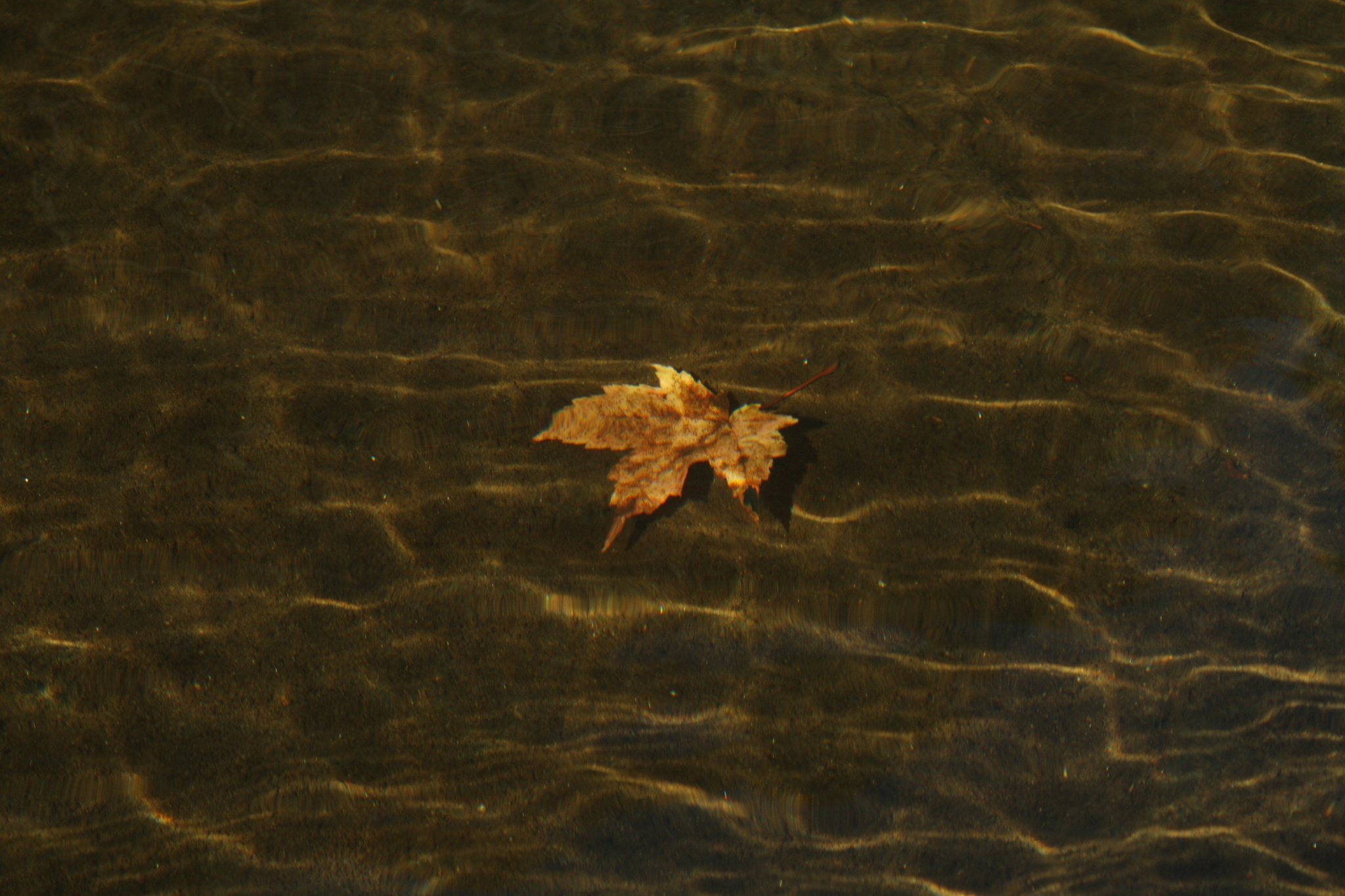 Leaf Under Water by Isabelle A
