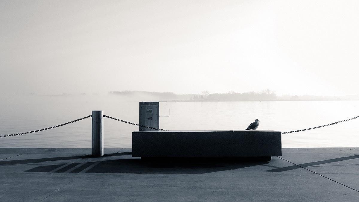 Foggy afternoon by Salam Yahya