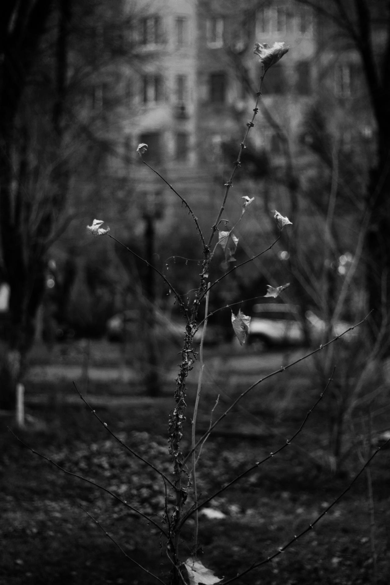 Life by Trdat Shiroyan