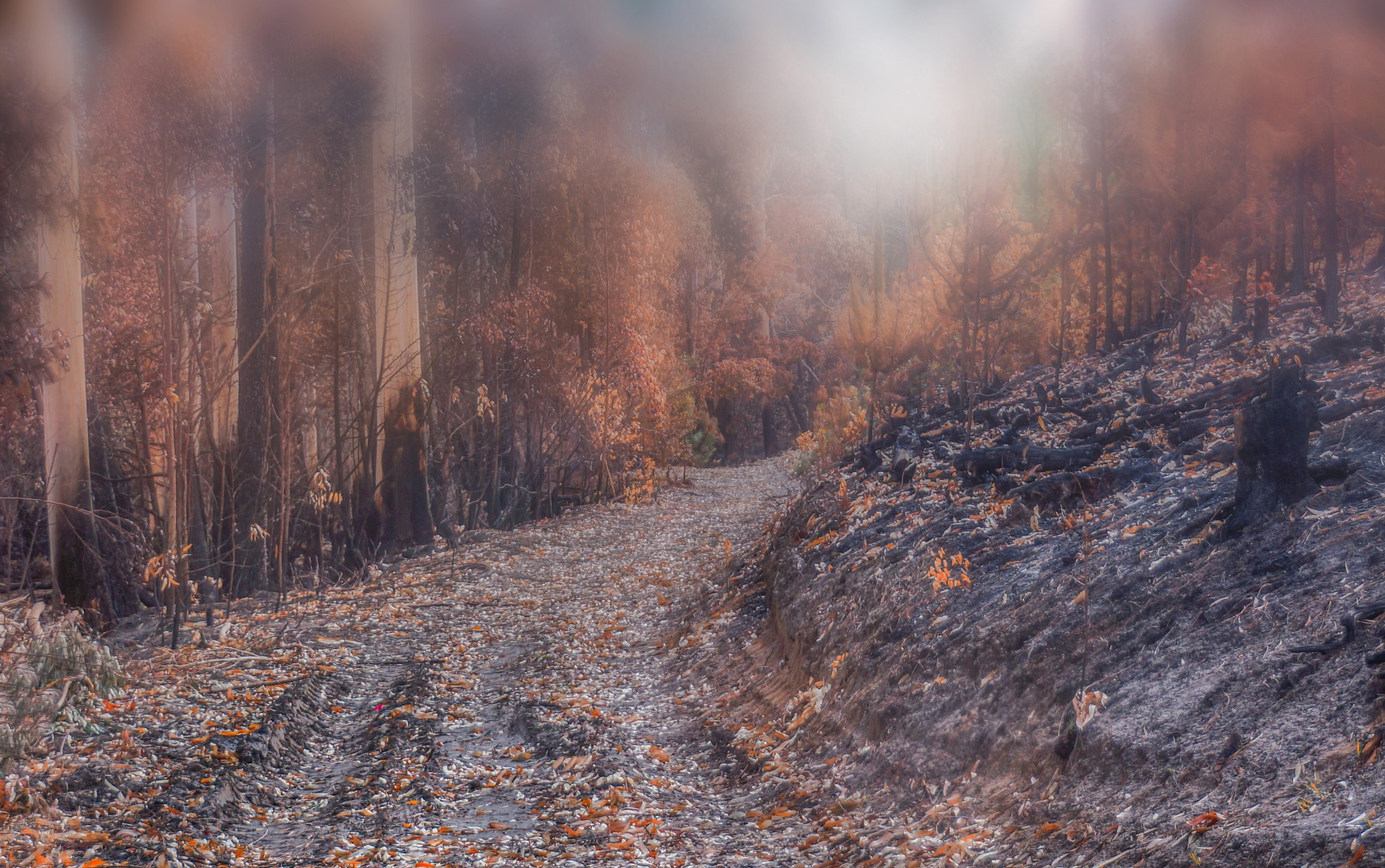 forest after the fire  by martin