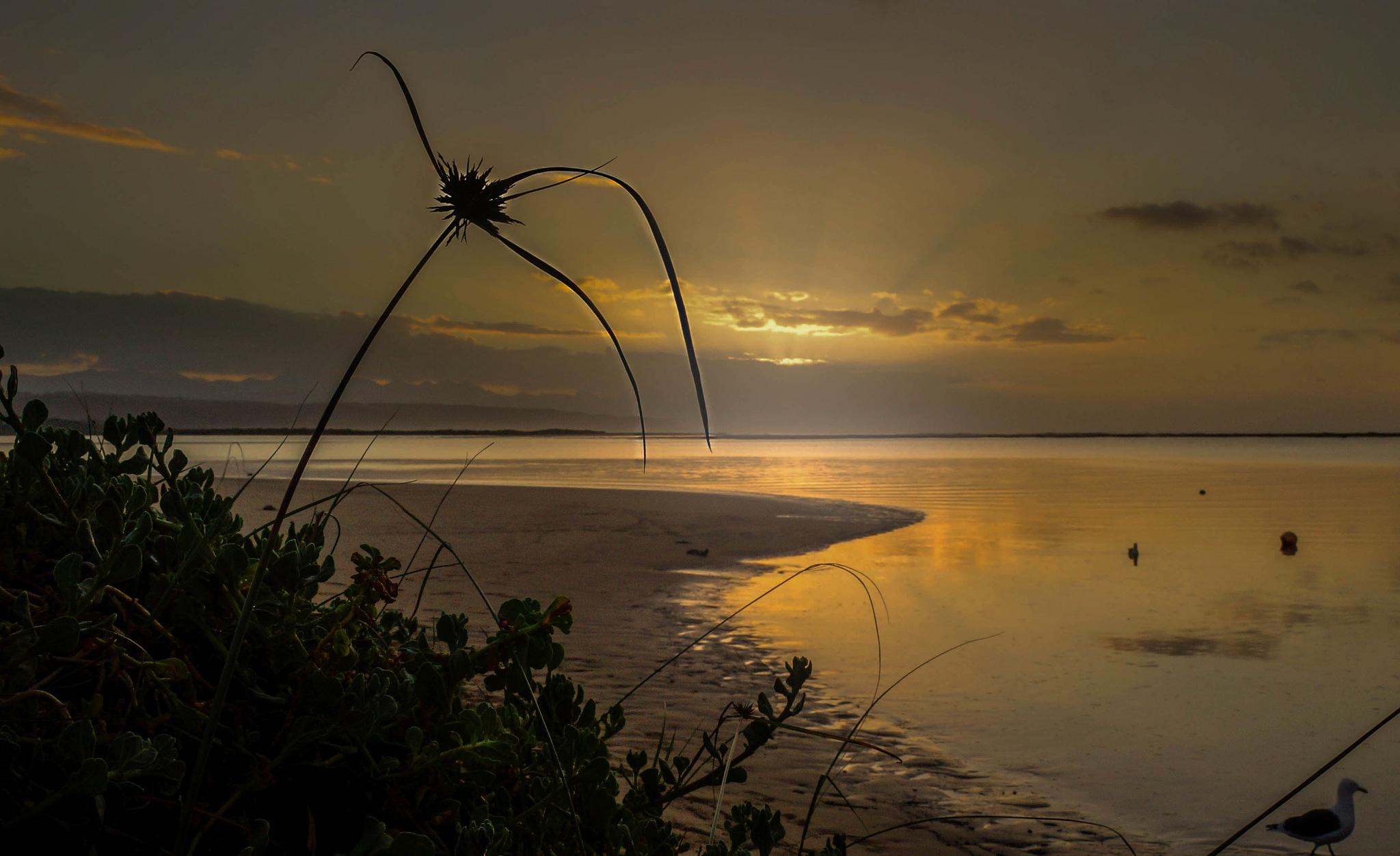 poortjies beach  by martin