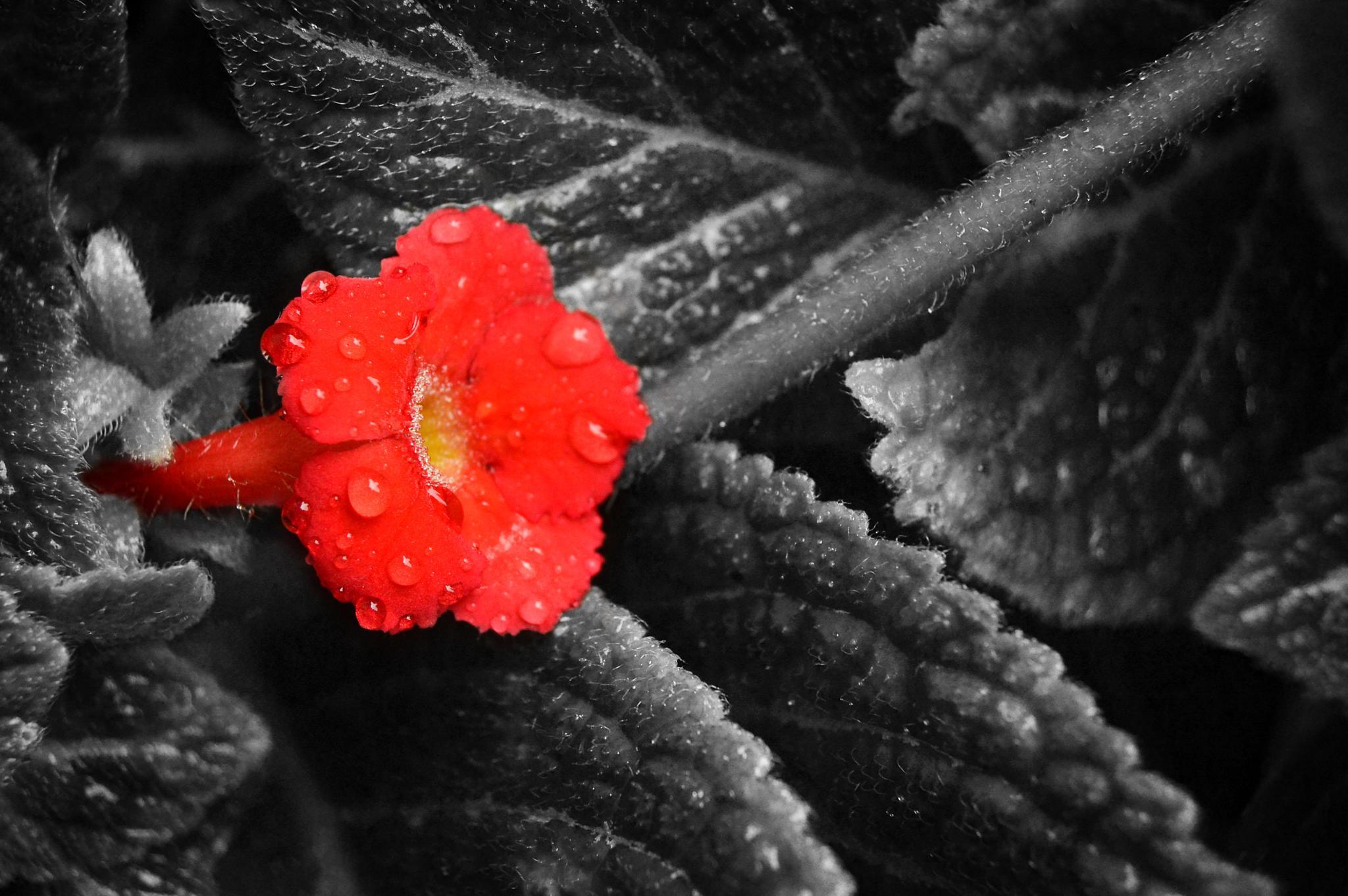 Red by bayunugroho78