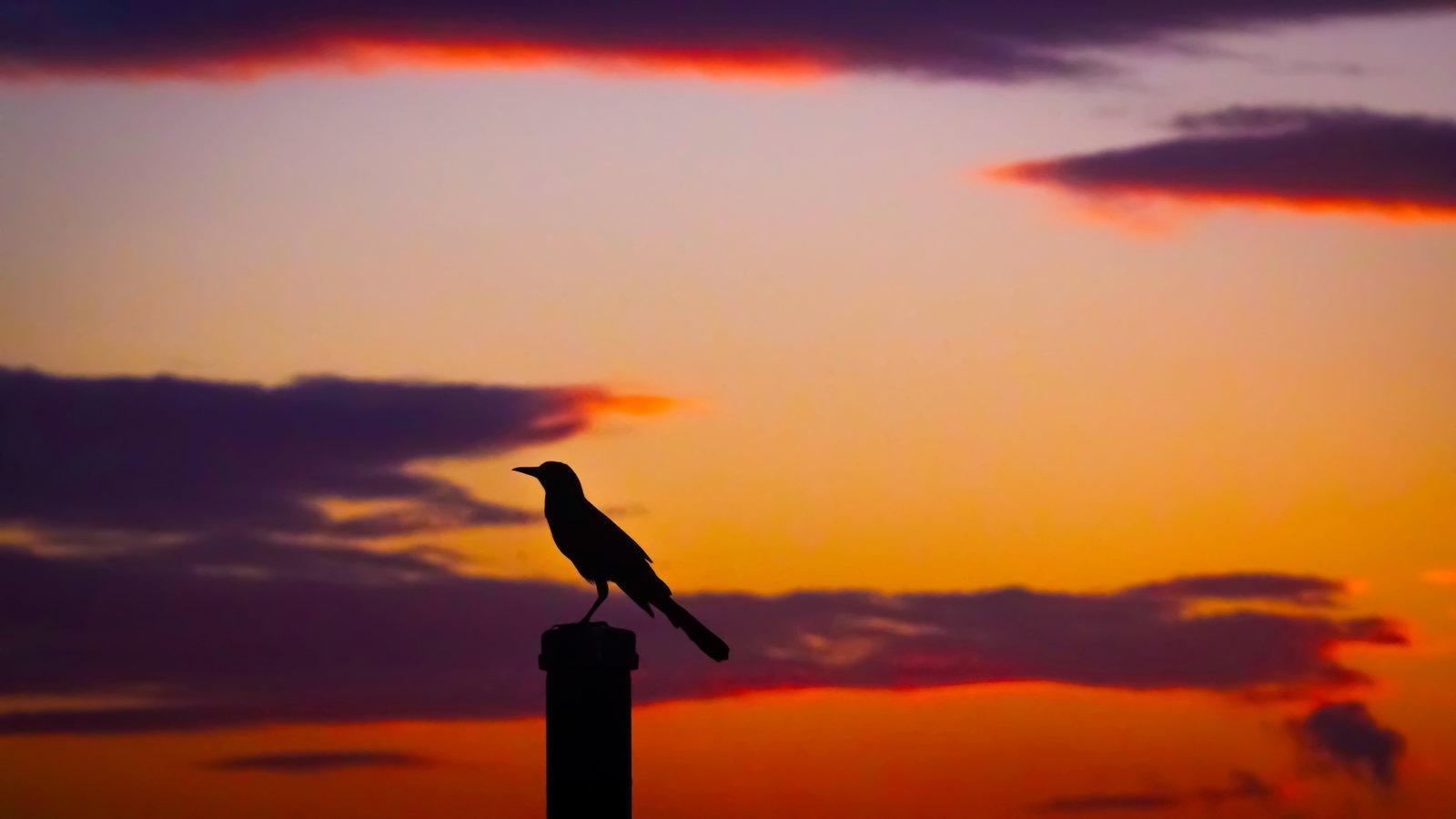 Raven Dusk by David Lustrup
