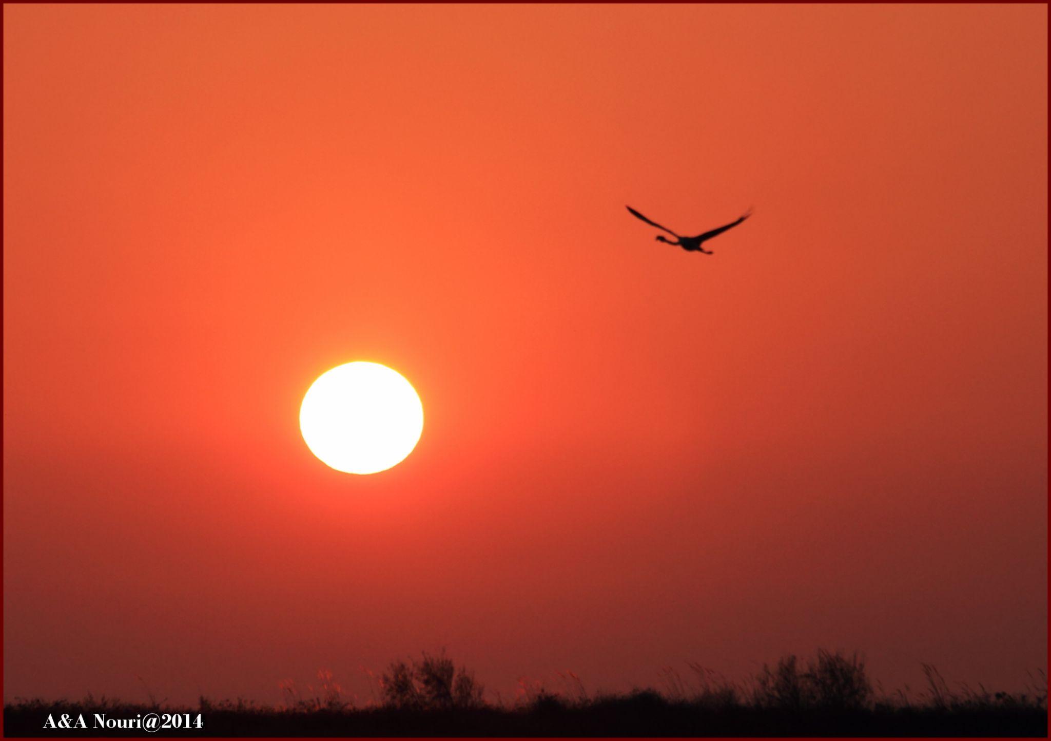 lonely flight by Akbar Nouri