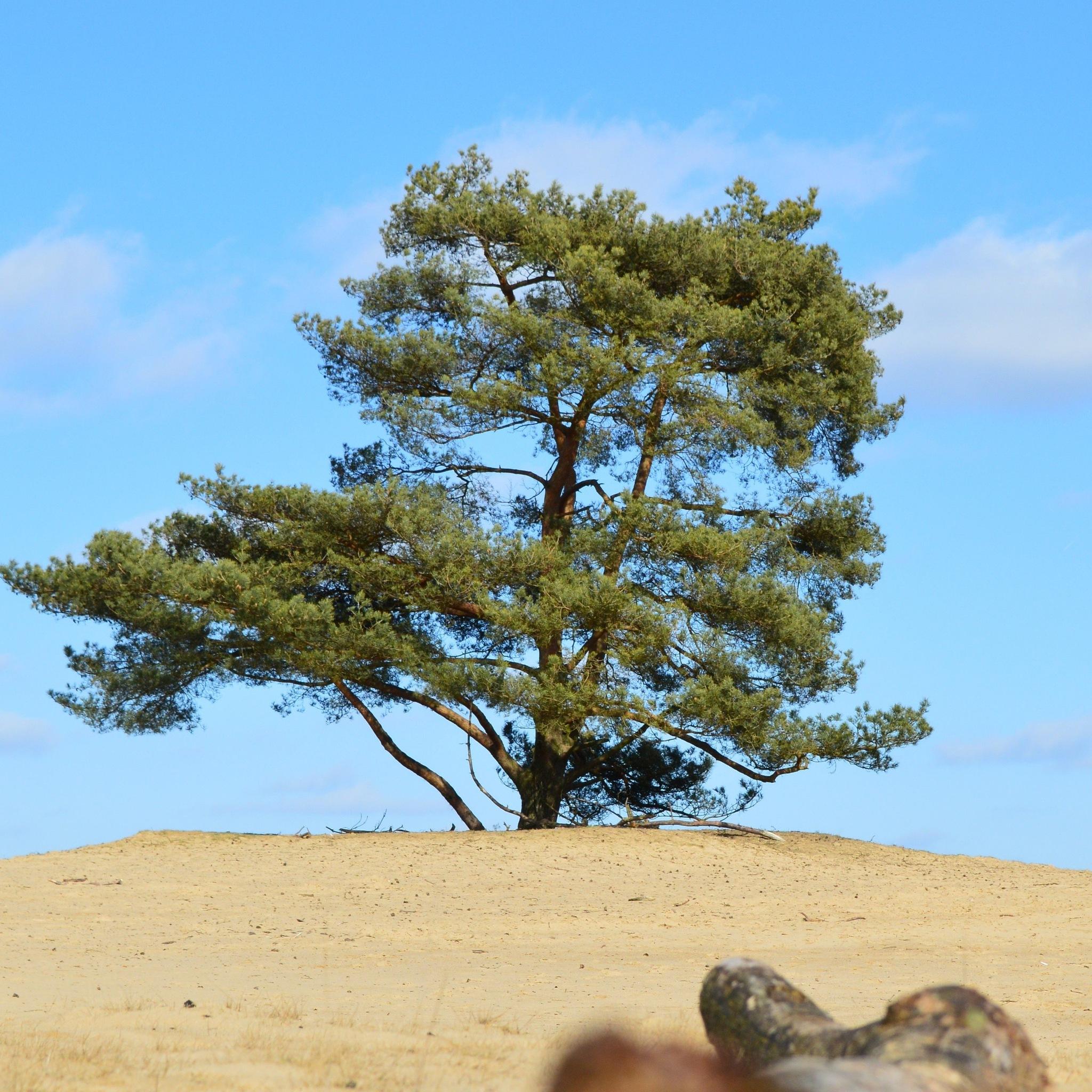 tree by Rik Ananias