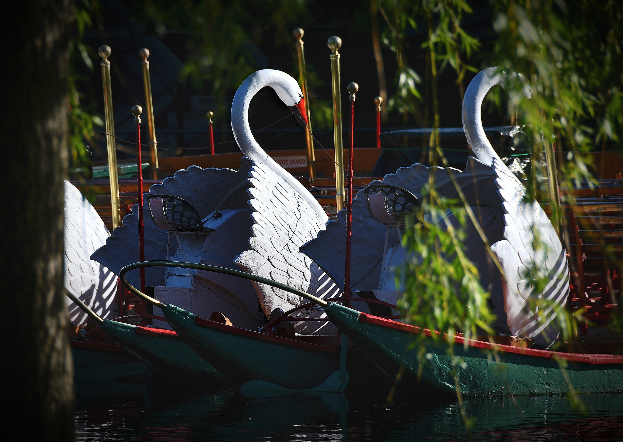 Moored Swan Boats by Charlie Murphy