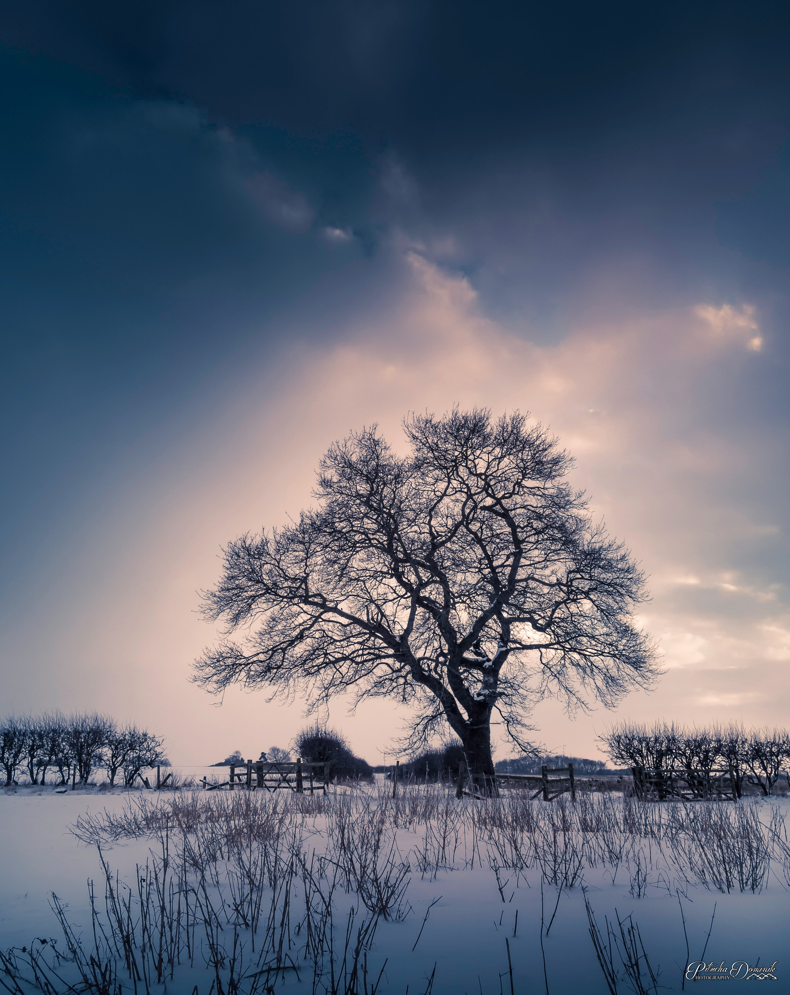 Single Tree in Sunset by Dominik Pitucha